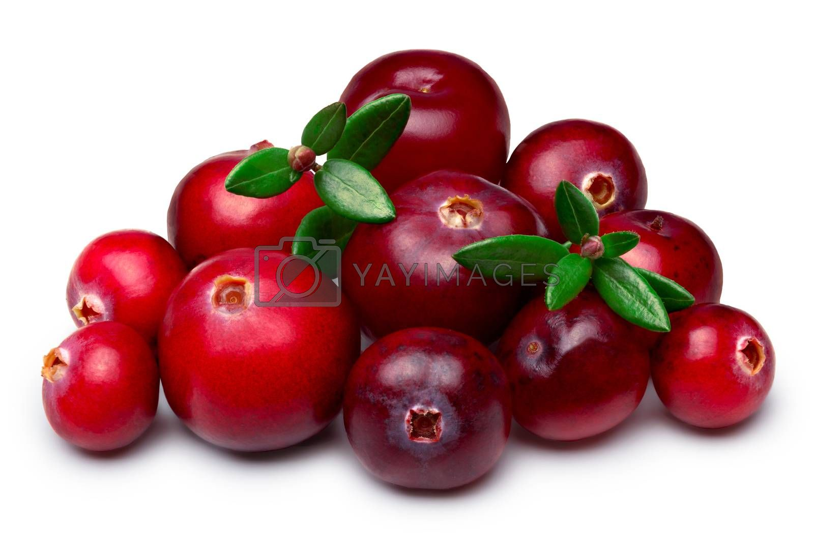 Heap of wild cranberries with leaves. Clipping paths, infinite depth of field, retouched.