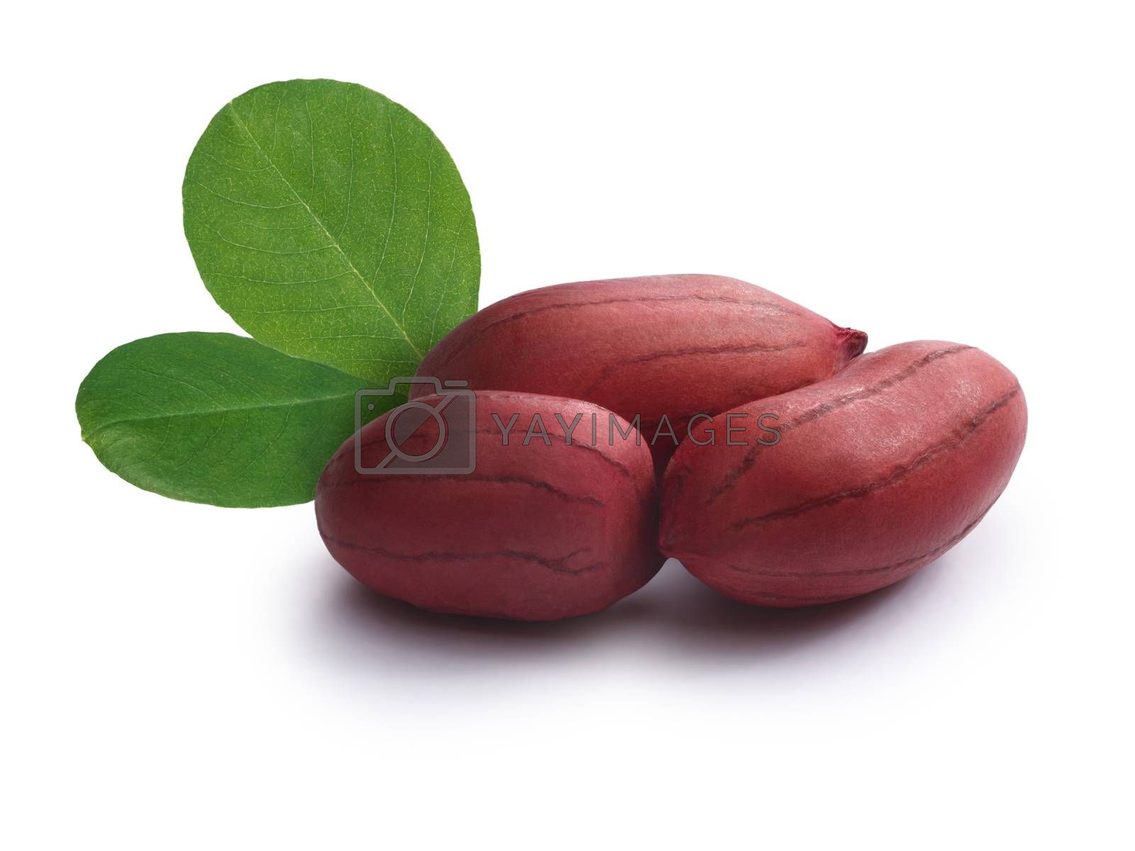 Whole, shelled raw peanuts with leaves. Clipping paths included, infinite depth of field