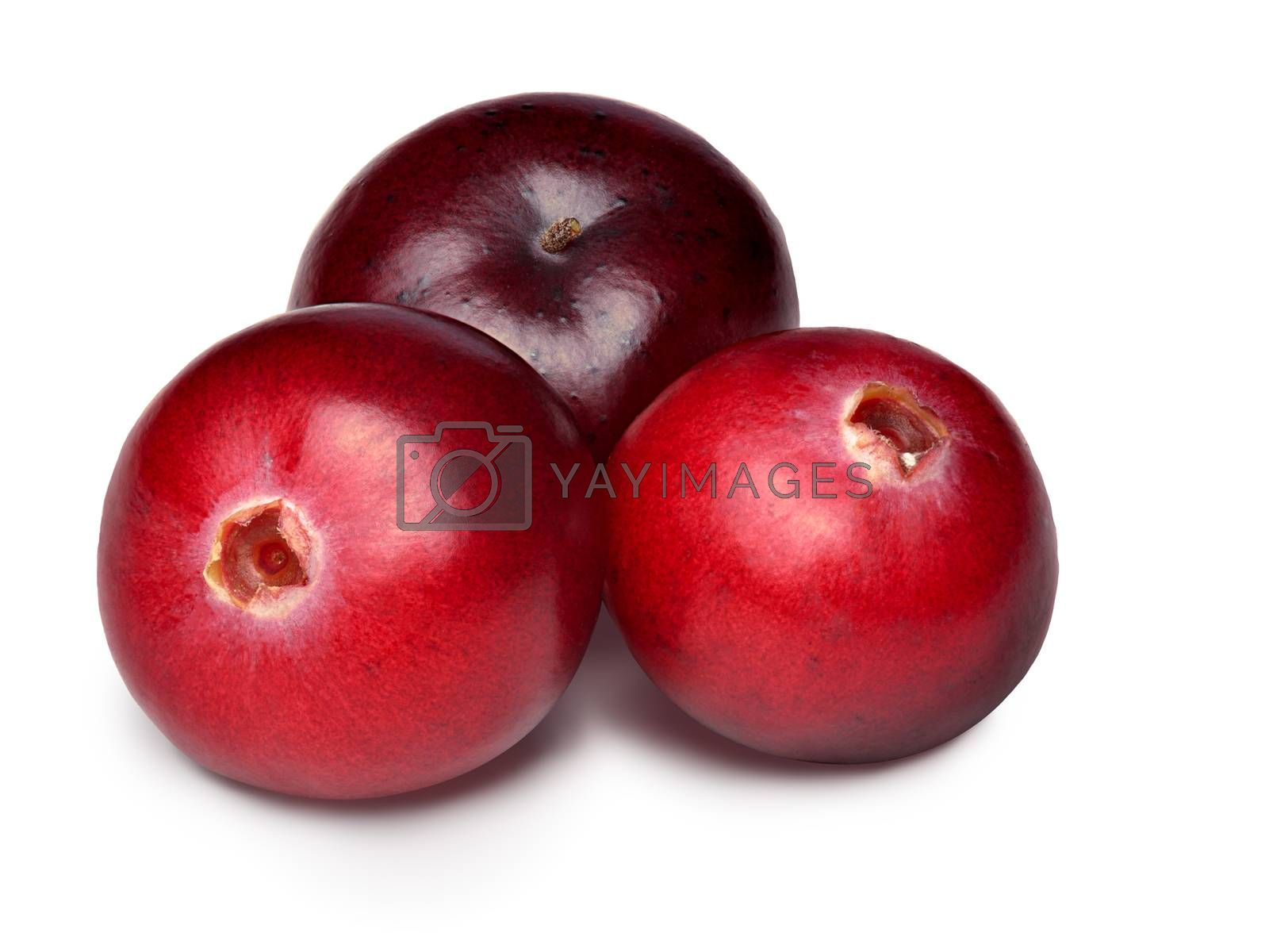 Three wild cranberries. Clipping paths, infinite depth of field, retouched.