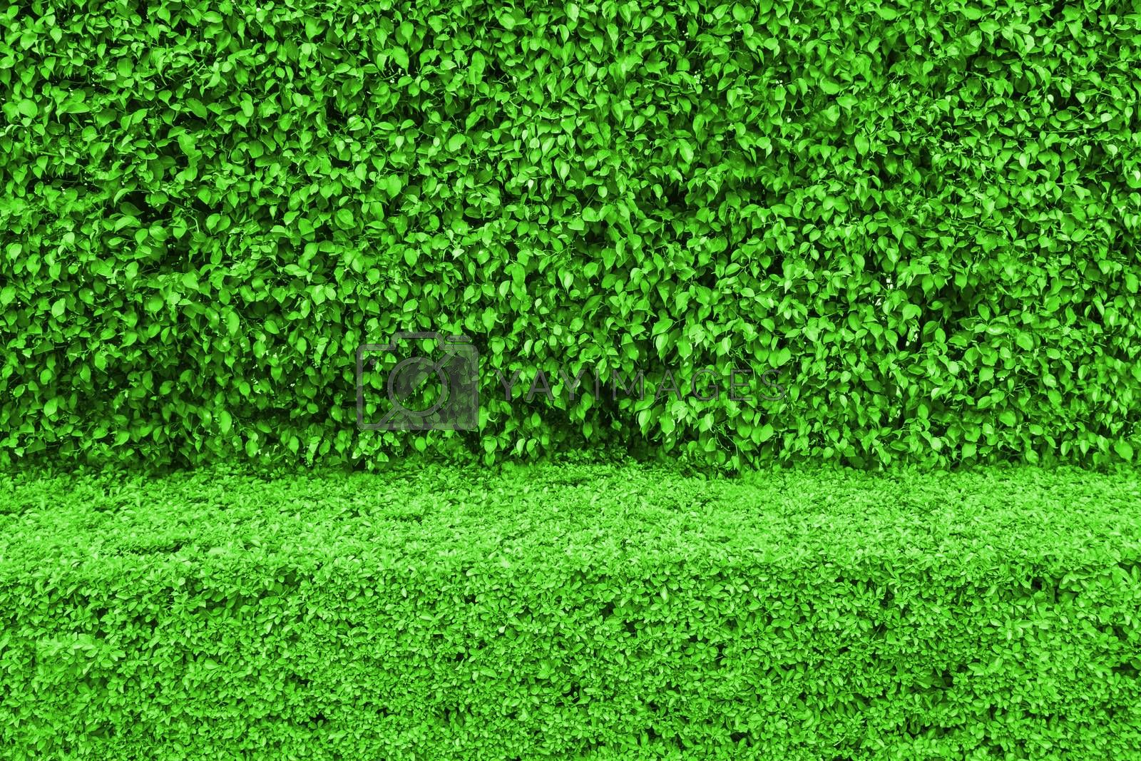 Natural green leaf wall and Texture background