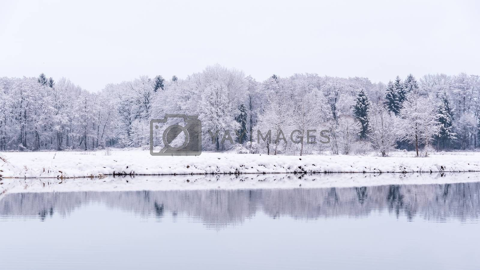 White winter landscape forest and fields countryside by Madphotos