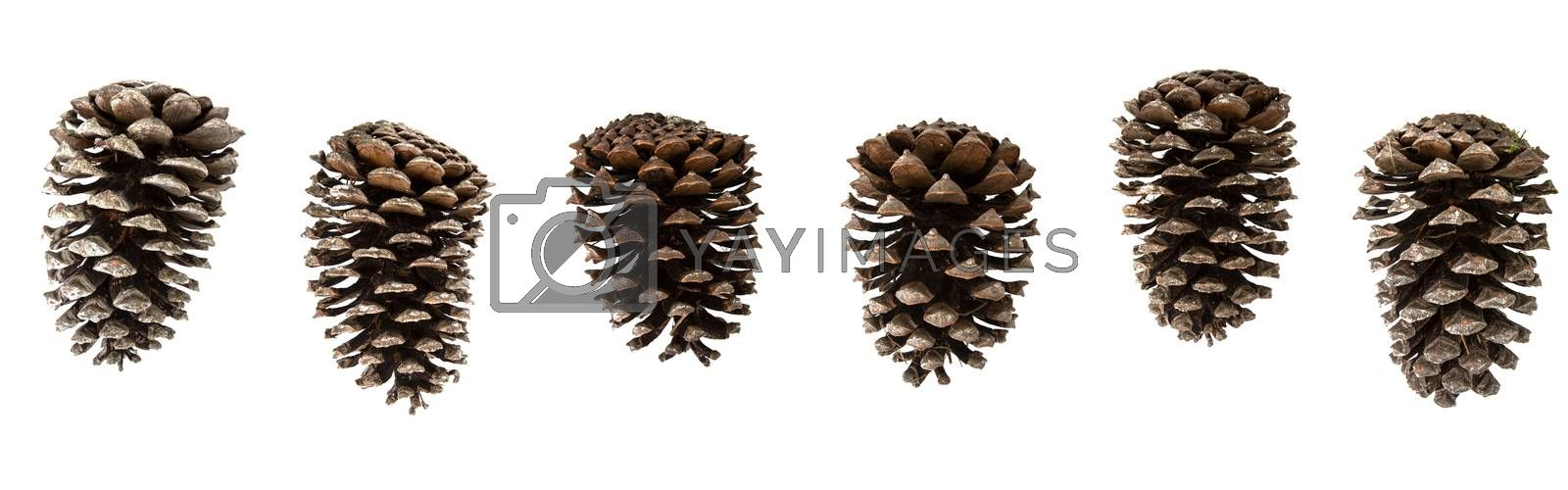 different pine cones on white background