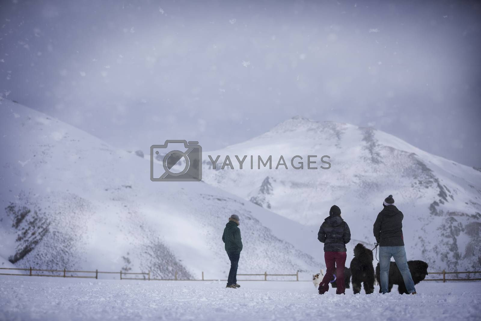 Group of people having fun in the snow
