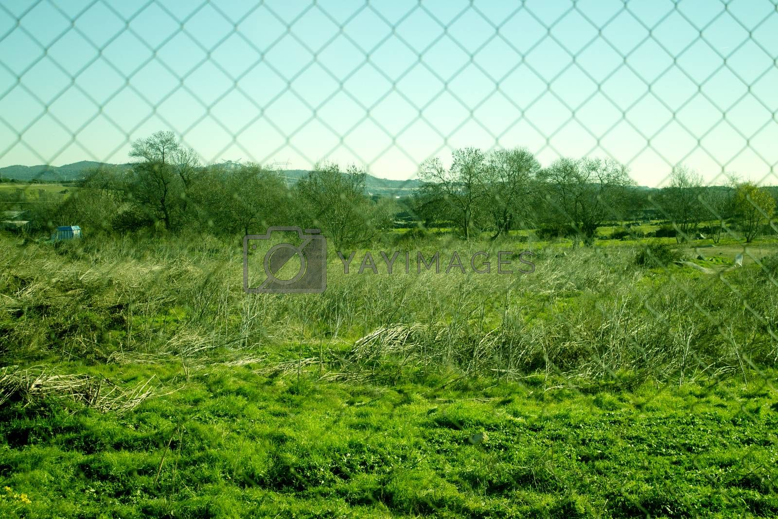 Field vision through a fence. No people