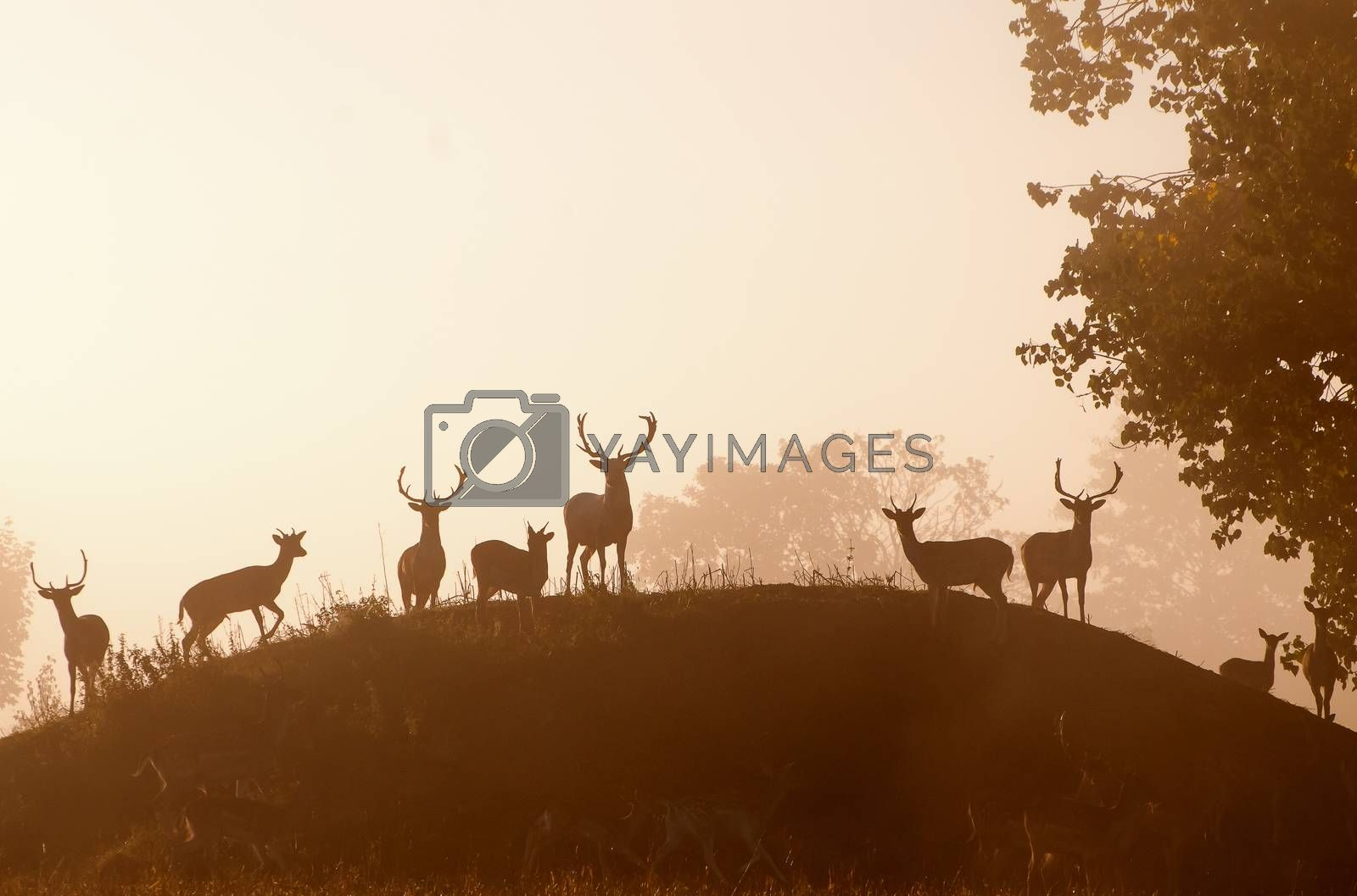 animal silhouettes on a hill
