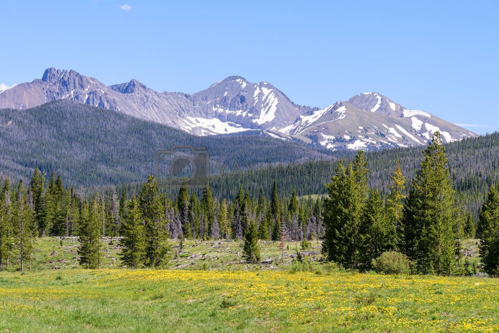 Colorado Scenic Beauty - Laramie Mountain Meadow by Gary Gray