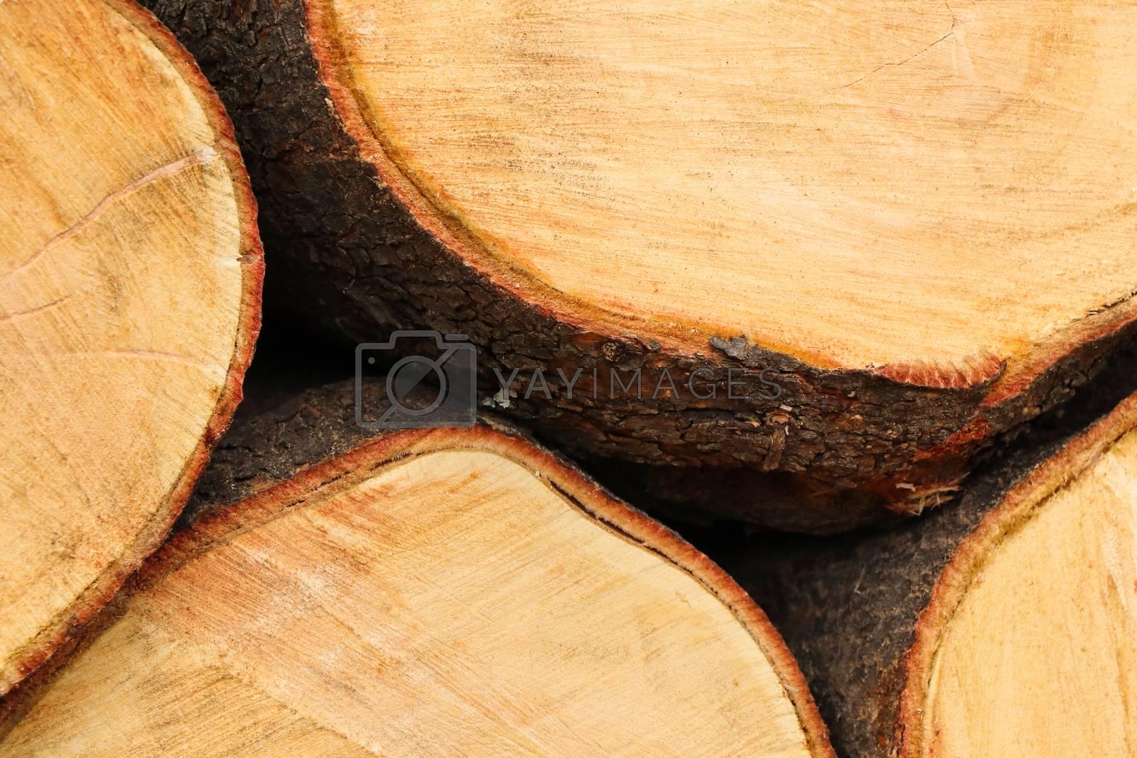 A stack of freshly cut white seringa (Kirkia acuminata) wood tree logs, Pretoria, South Africa