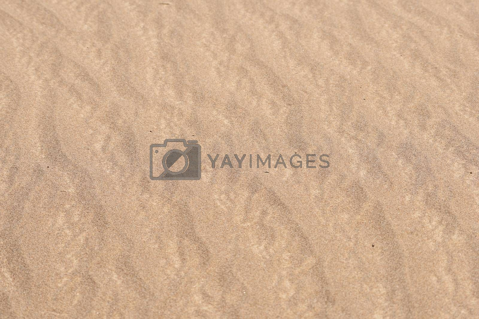 Real Desert sand texture and pattern for background or presentation