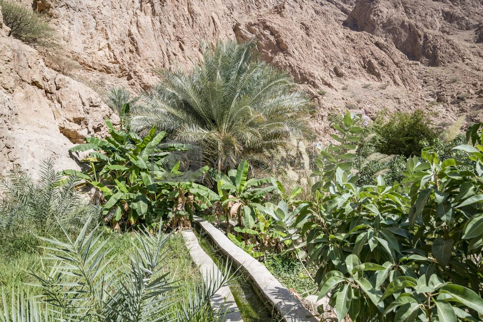 Irrigagtion system and Plantations in the canyon of Wadi Shab, Tiwi, Oman