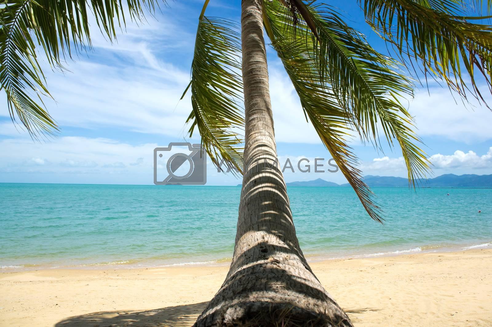 Tropical beach with coconut palm, Ko Samui, Thailand