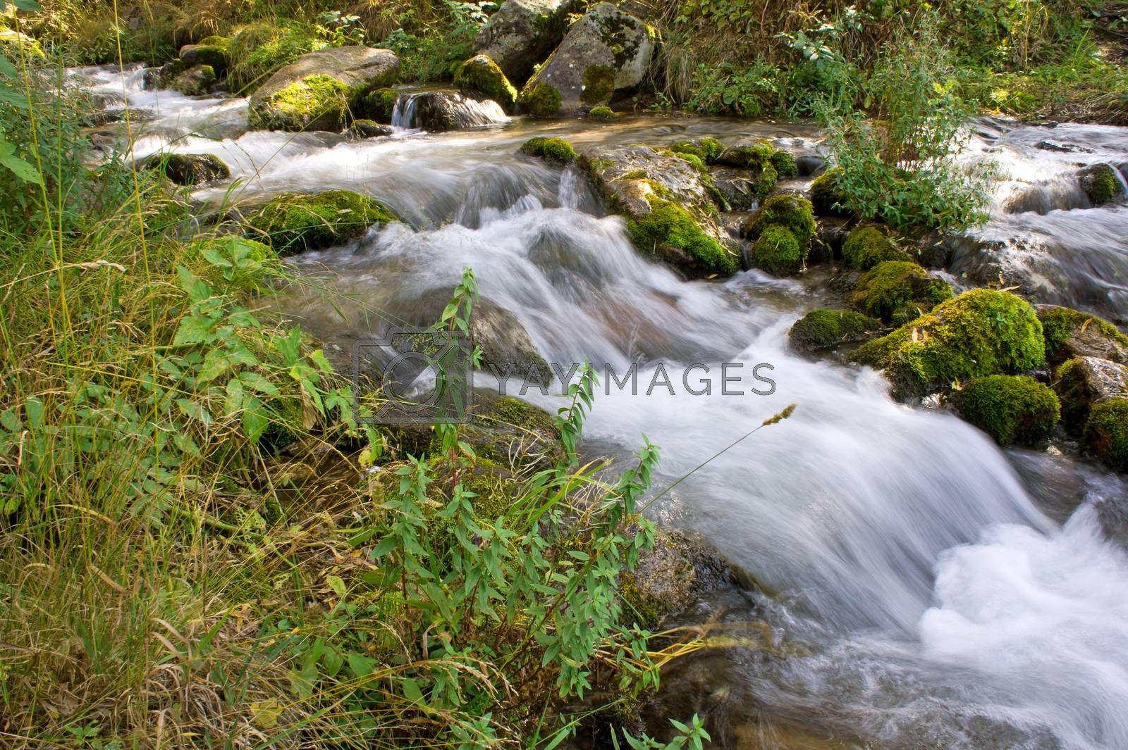 Forest stream running over mossy rocks in Alps