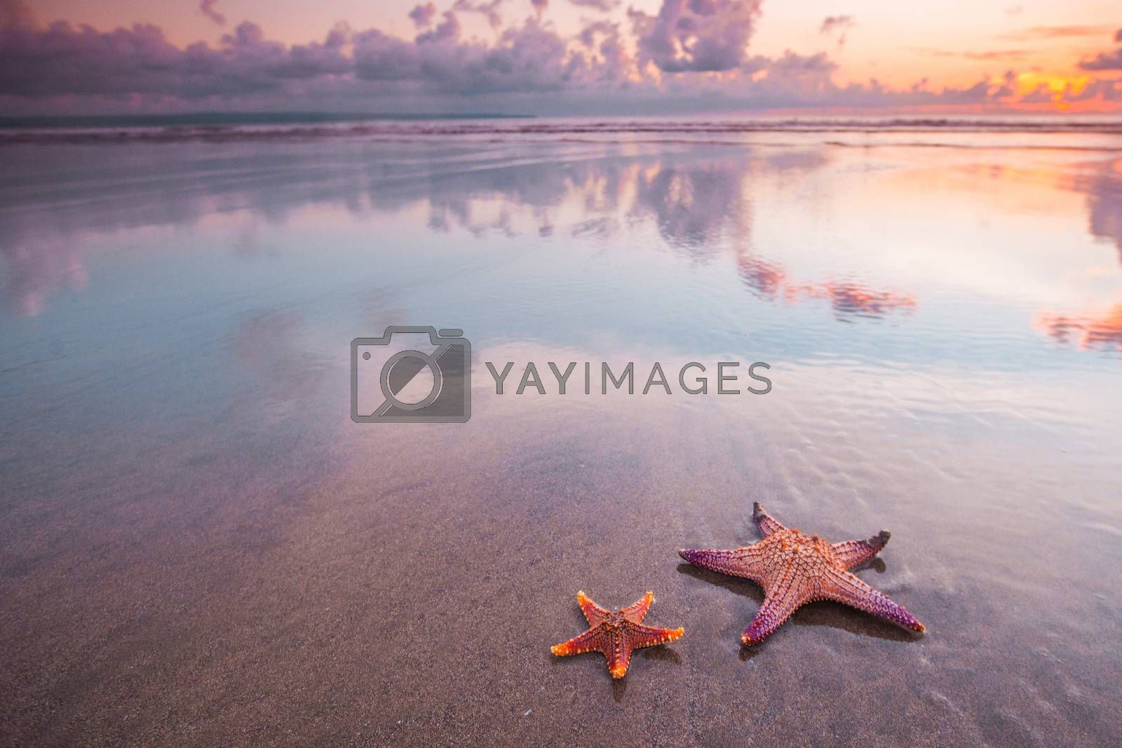 Two starfish on summer beach at sunset tropical romantic vacation background