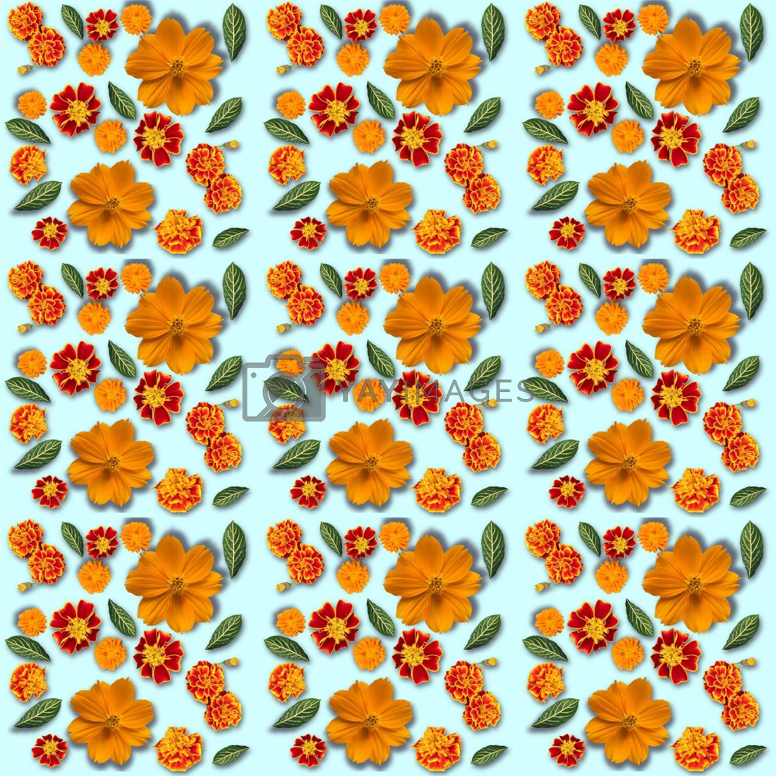 Yellow flowers pattern on a blue background. Cosmos, marigold and calendula flowers composition. Top view.