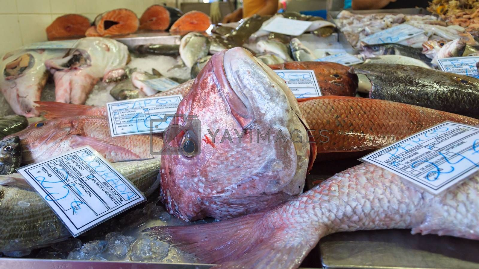 Various fresh fishes in portuguese fish market