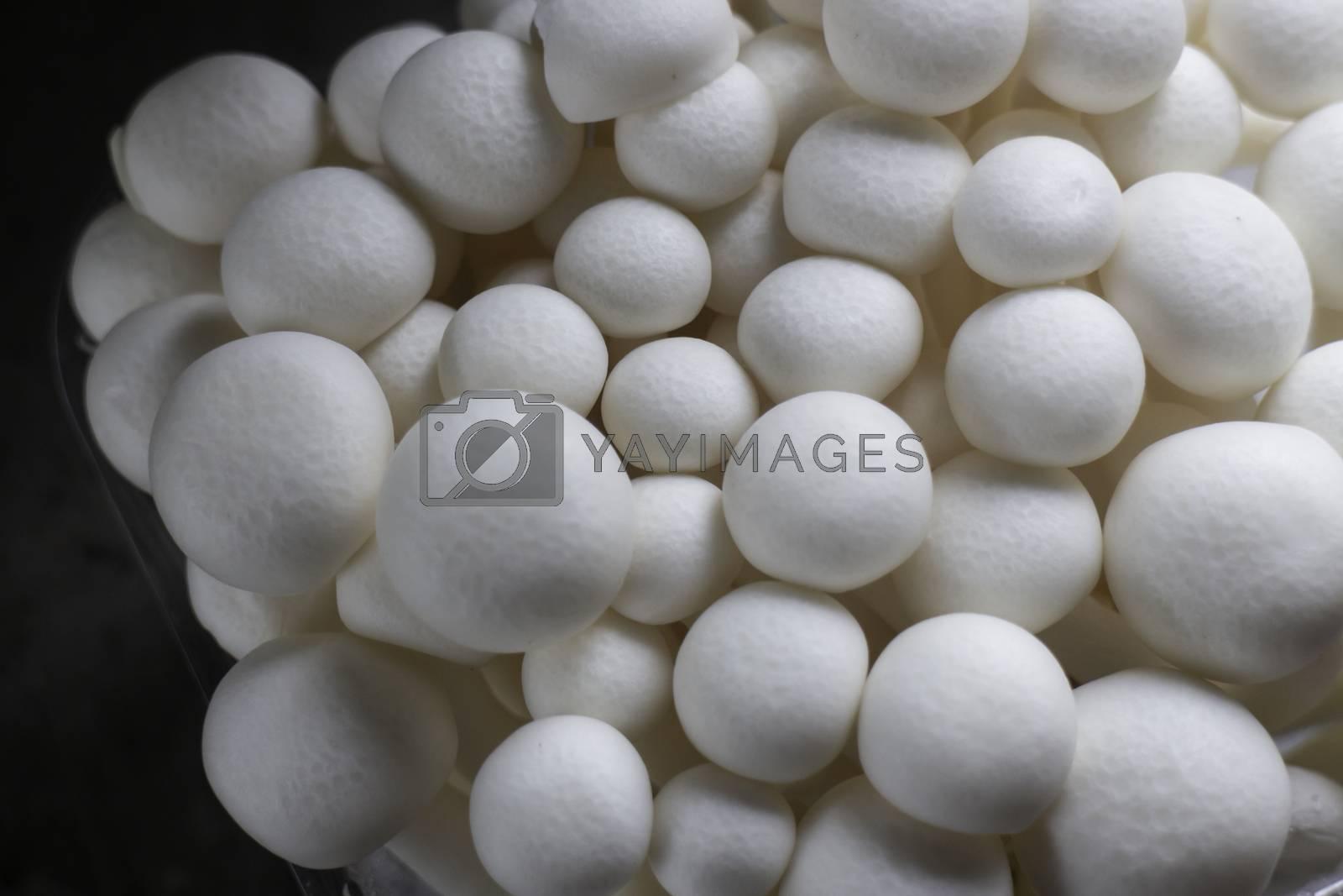 Raw shimeji mushroom for asian cuisine, stock photo
