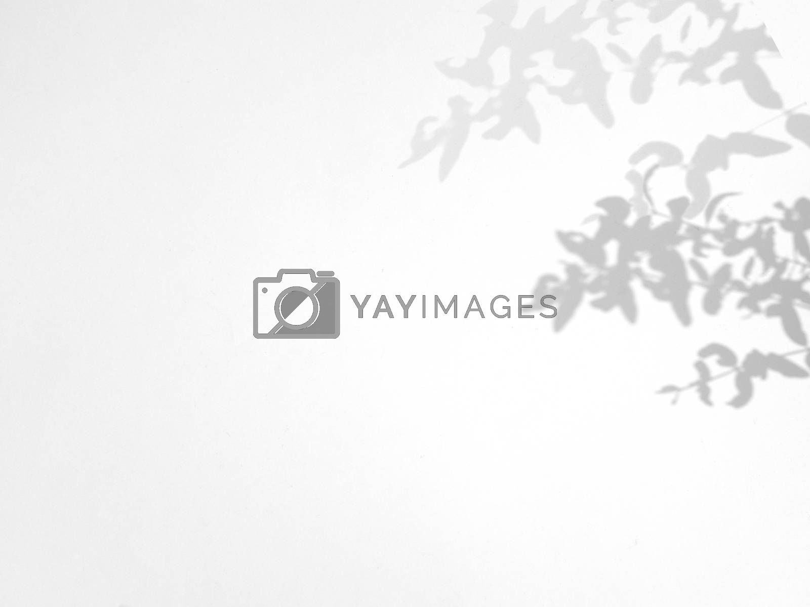 Leaves natural shadow overlay on white texture background, for overlay on product presentation, backdrop and mockup