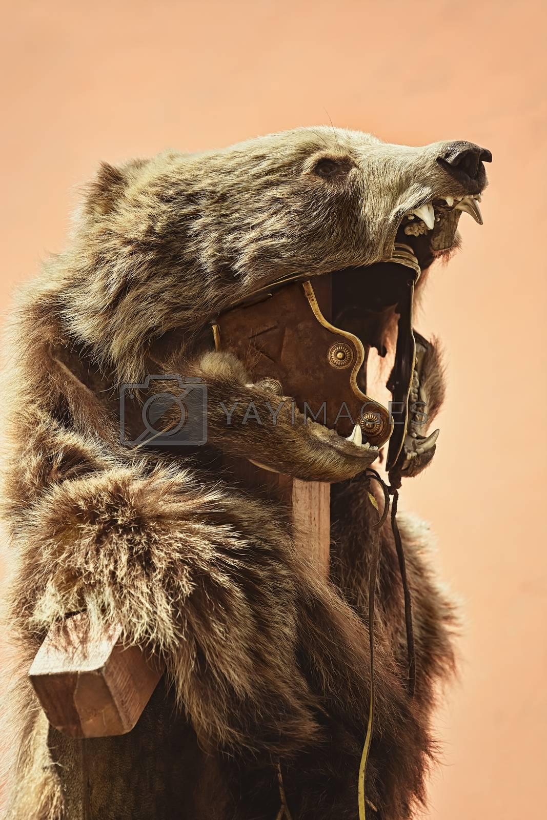 Suit of Roman Legionary with Bear pelt