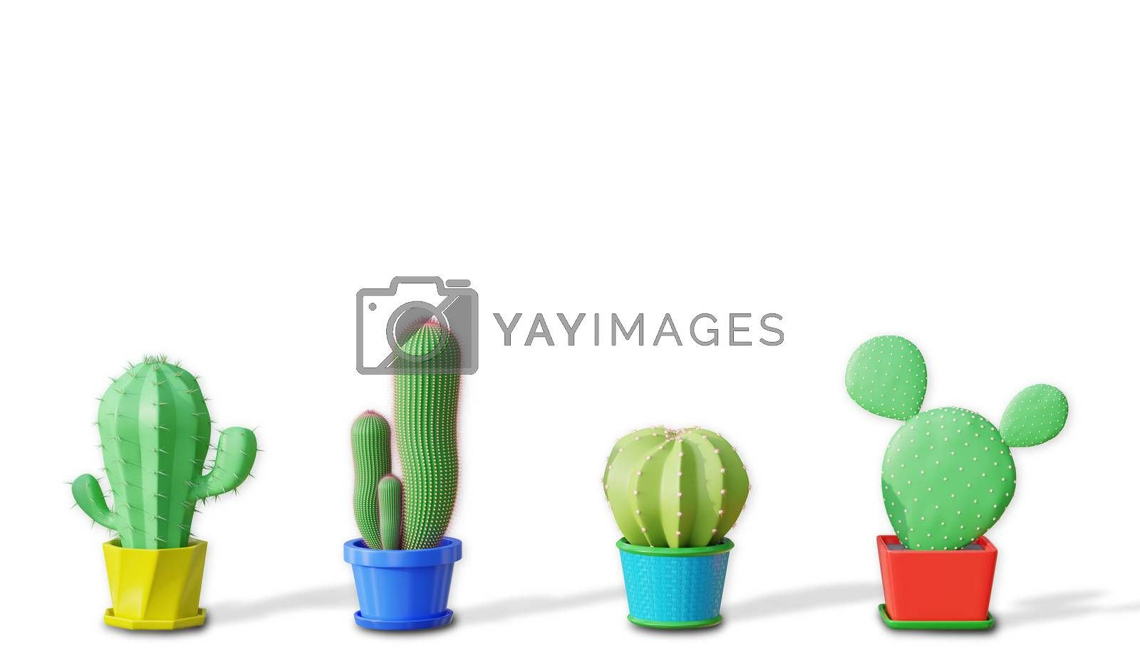 Four cactus difference species in cartoon minimal style with a white background. Copy space for your heading on top of the object. The concept of lover and like cactus. 3D illustration rendering.