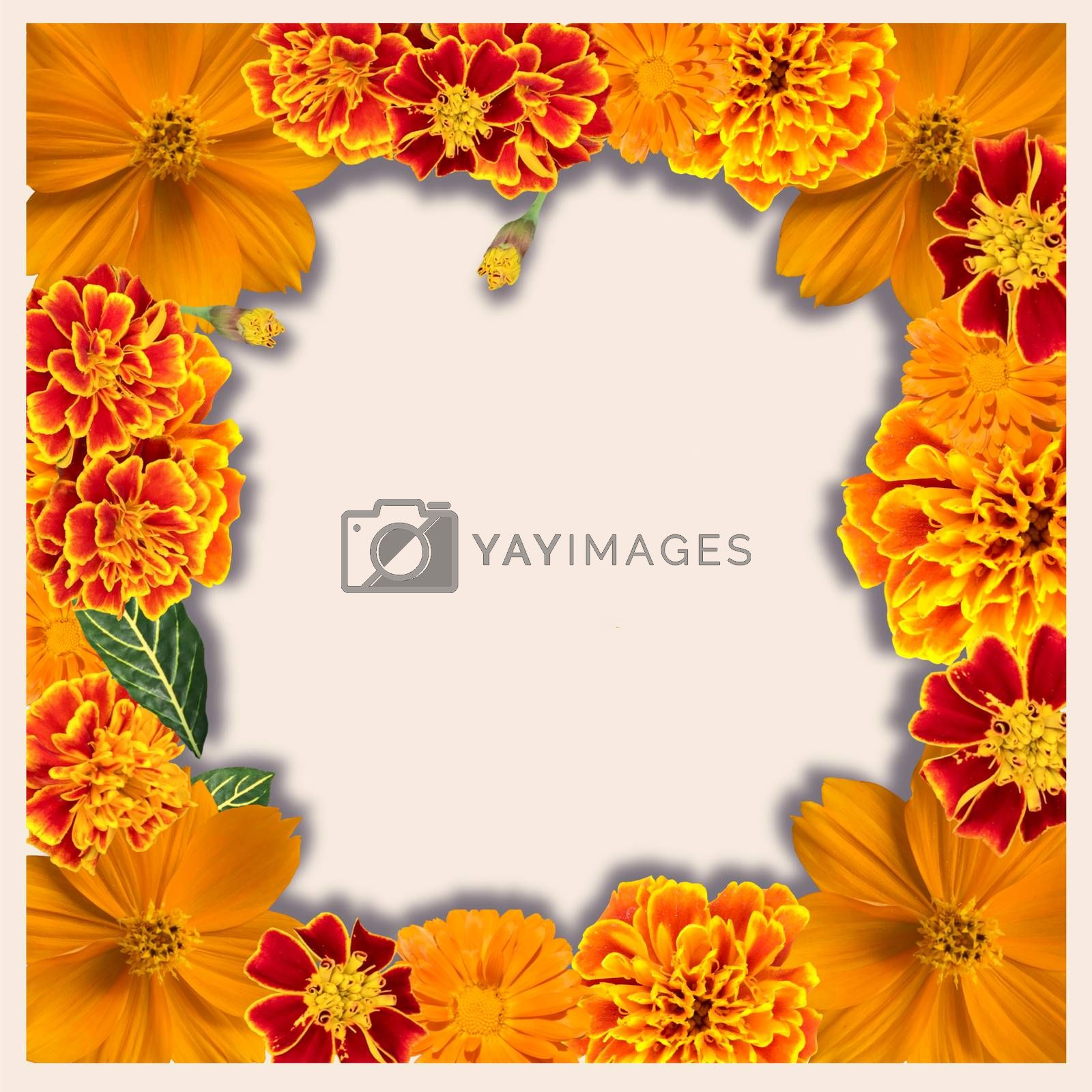 floral frame with Various Yellow and orange color  by Margolana