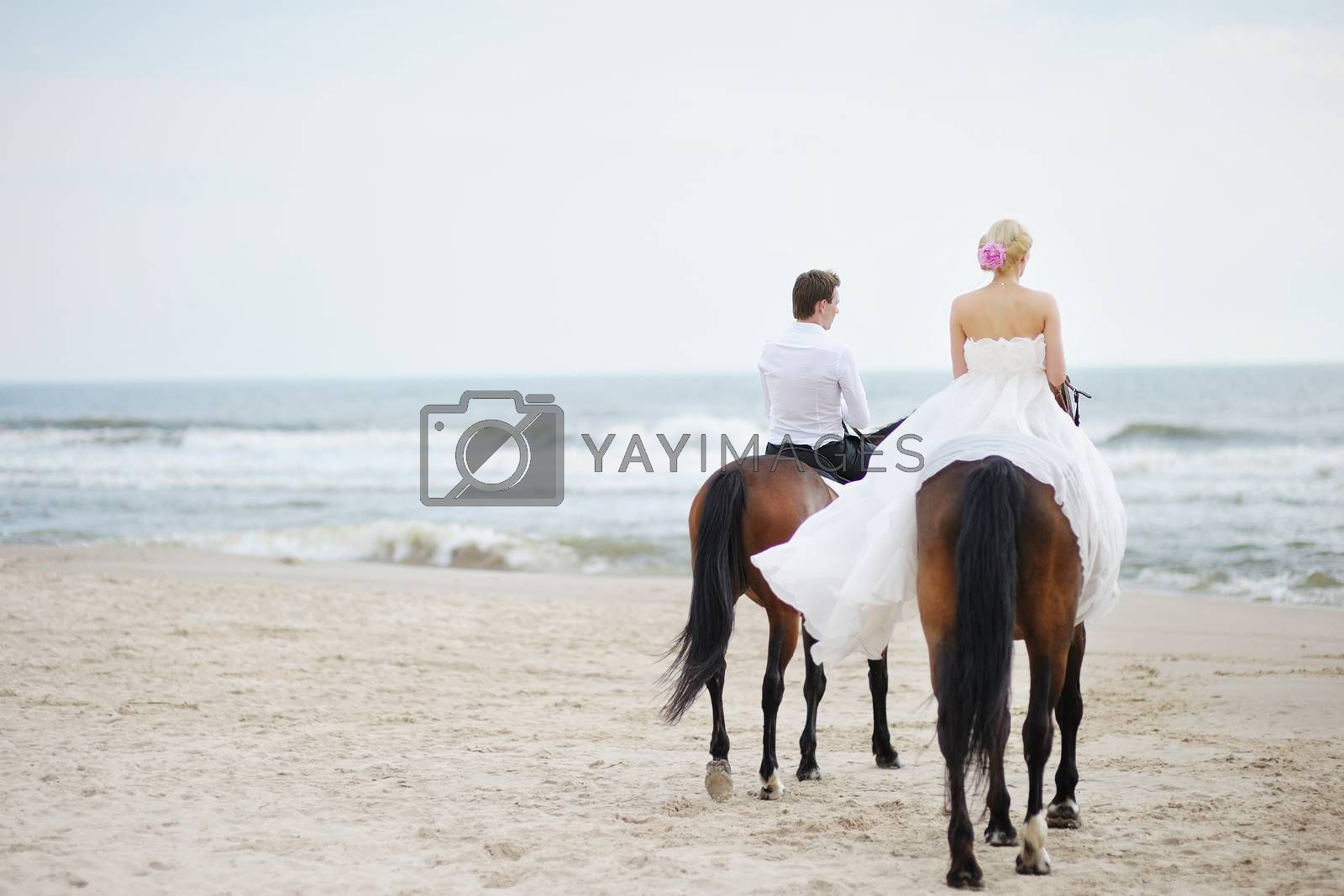 Beach wedding: bride and groom on a horses by the sea