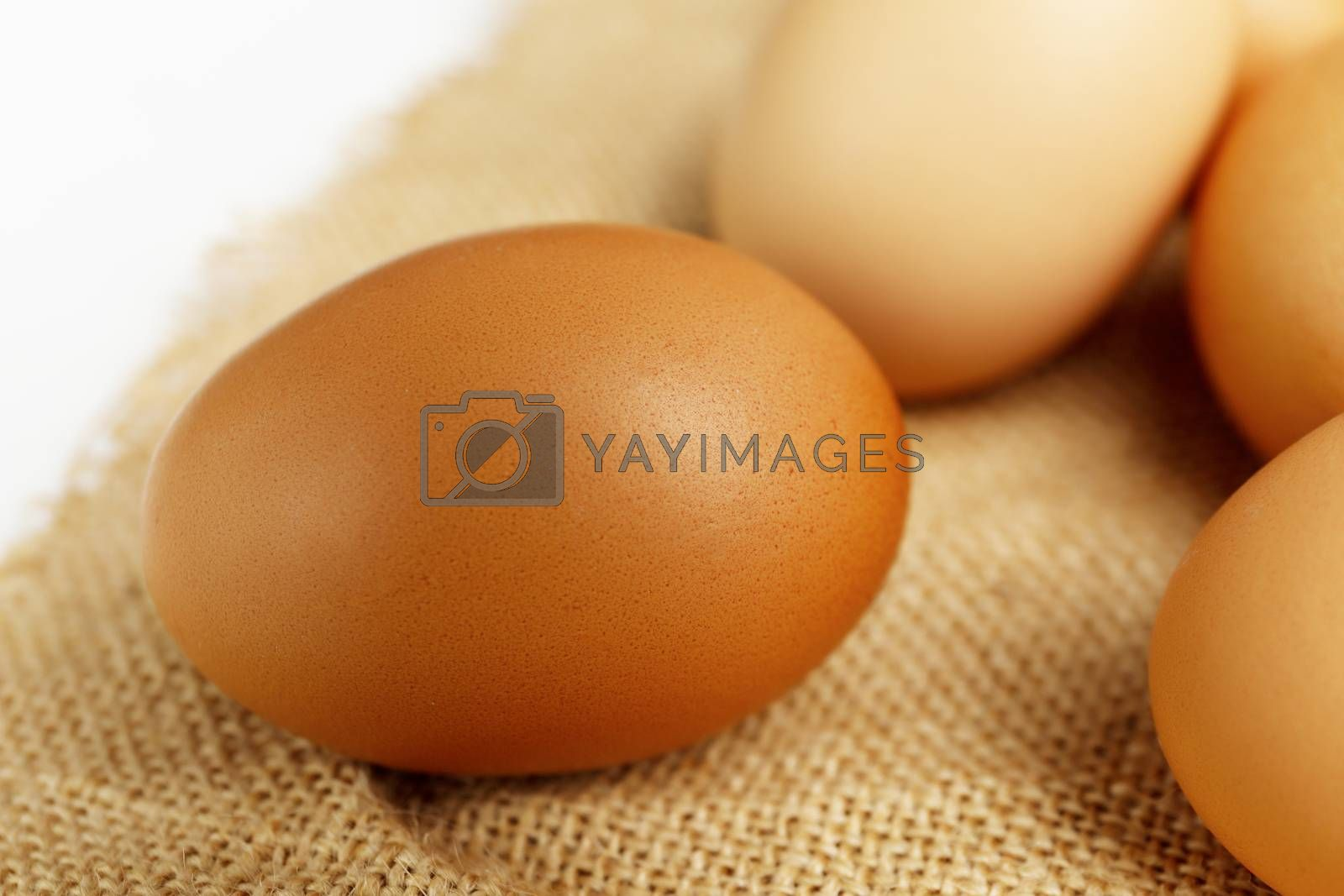 Close up fresh chicken egg on linen tablecloth with copy space.  Fresh chicken egg with blur eggs background.