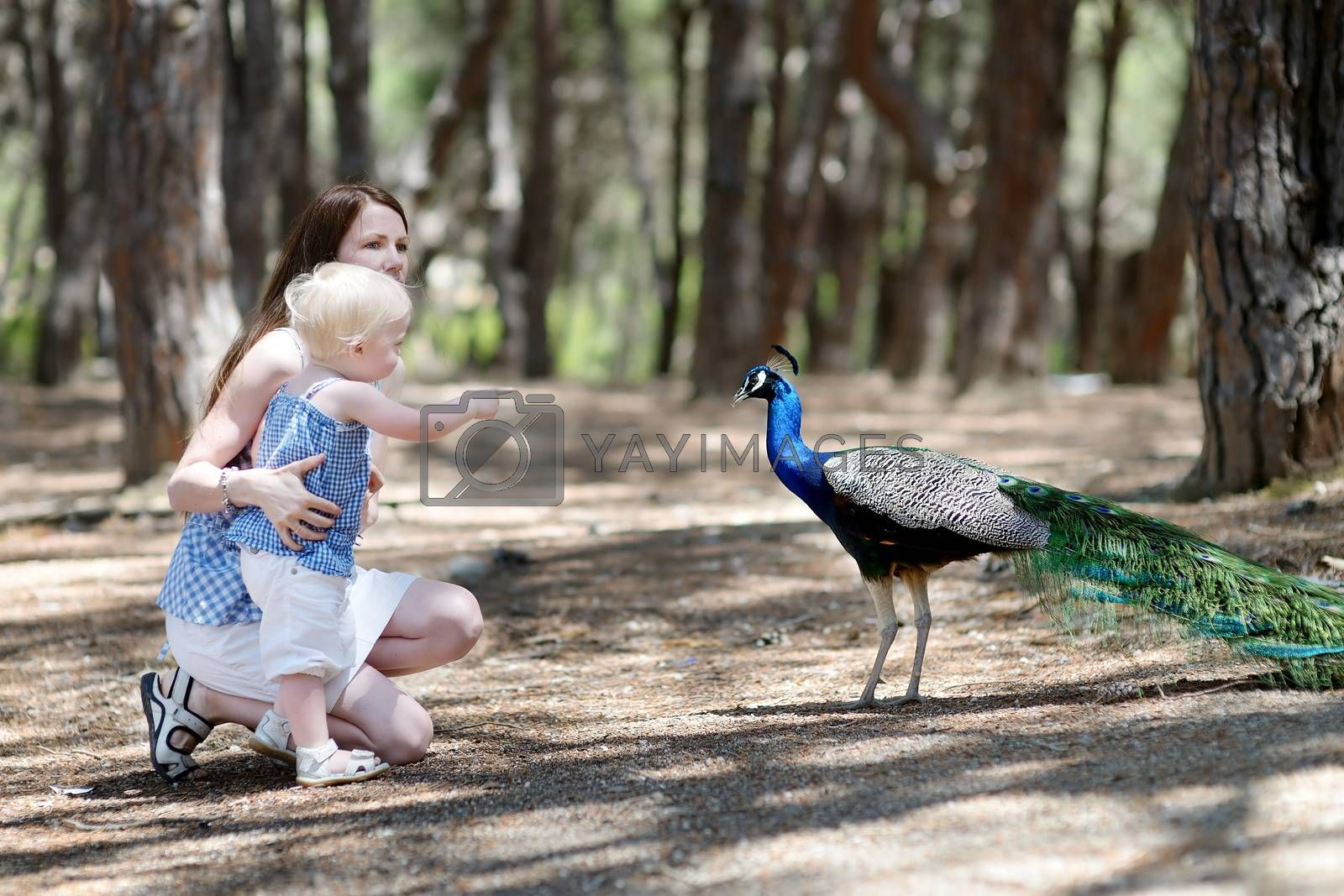 Young mother and her child feeding a peacock