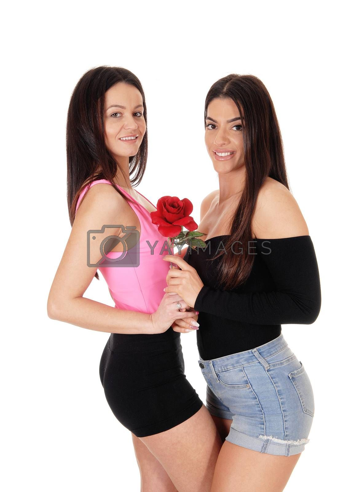 Two beautiful young woman standing front to front in shorts holding  a rose, looking at the camera, isolated for white background