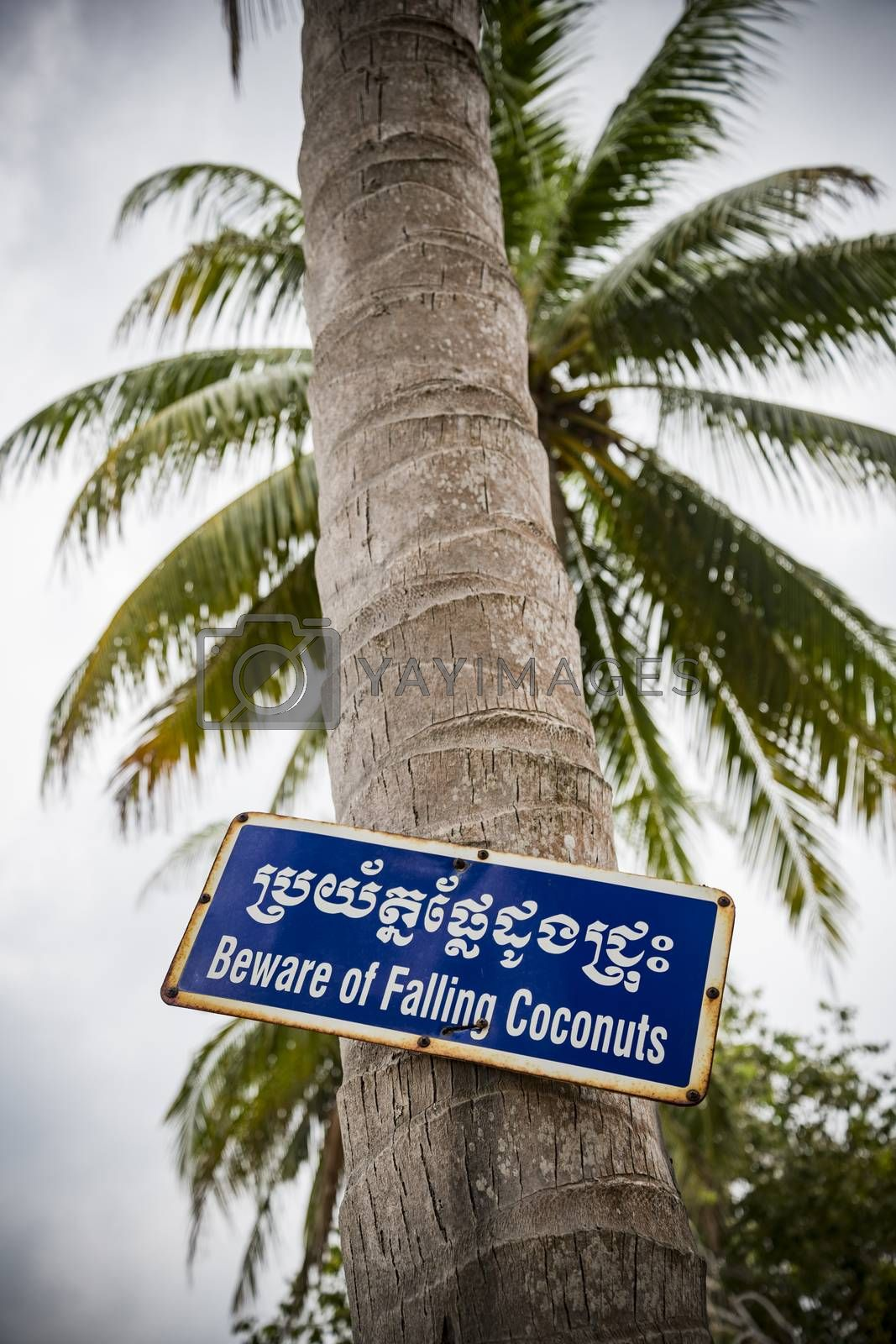 Metallic Sign board indicating a risk of falling Coconuts in English and Cambodian (Beware of falling Coconuts), Cambodia, Asia