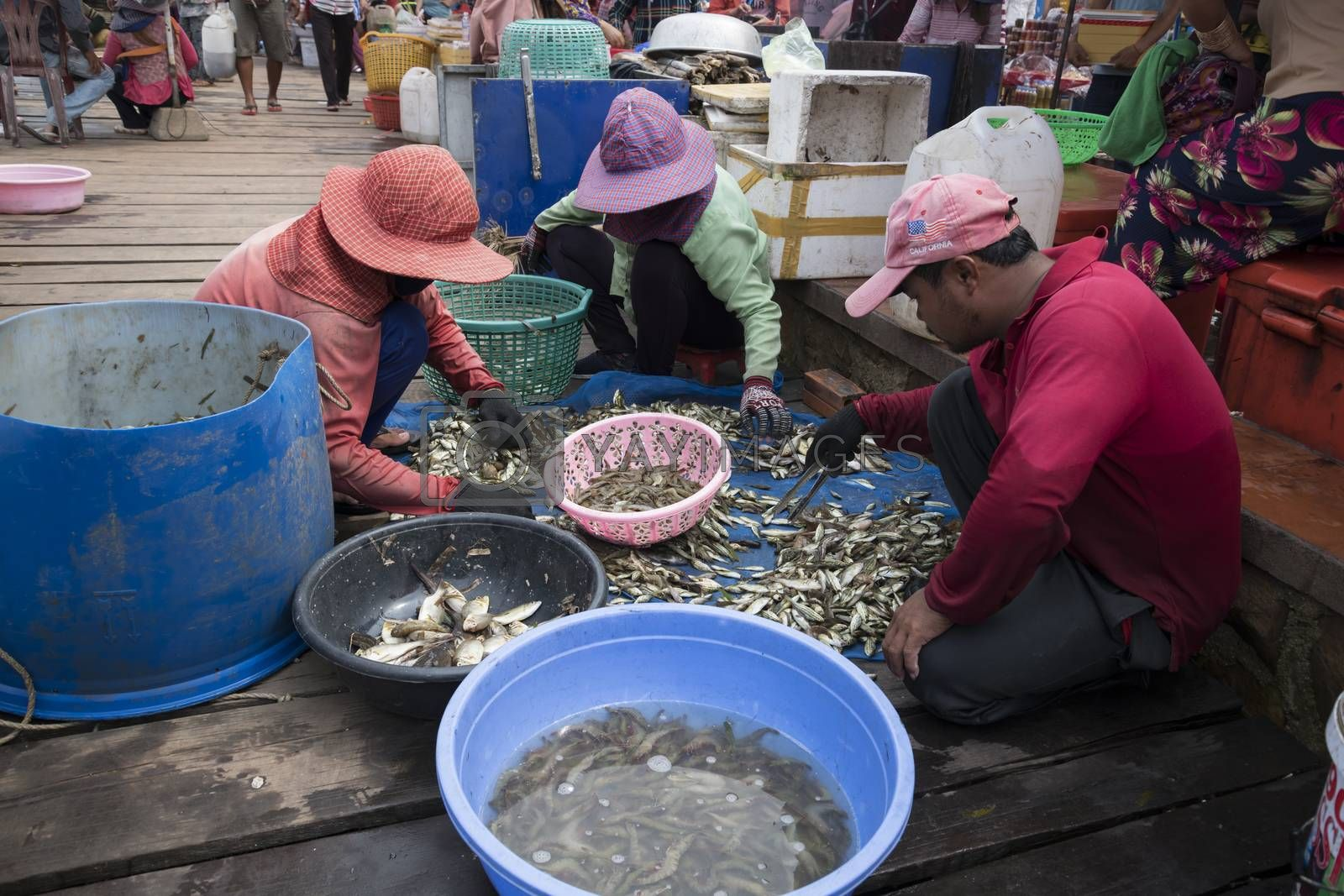 Krong Kaeb, Kep Province, Cambodia, 31 March 2018. Cambodians sorting fishes at the crab market