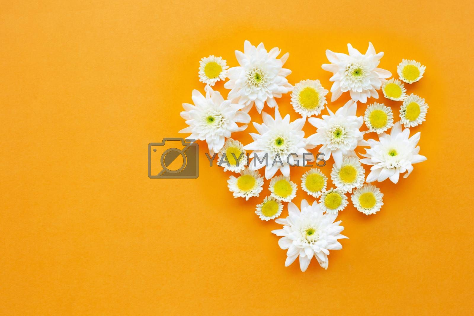 Composition of flowers,  Chrysanthemums on yellow paper background. Top view