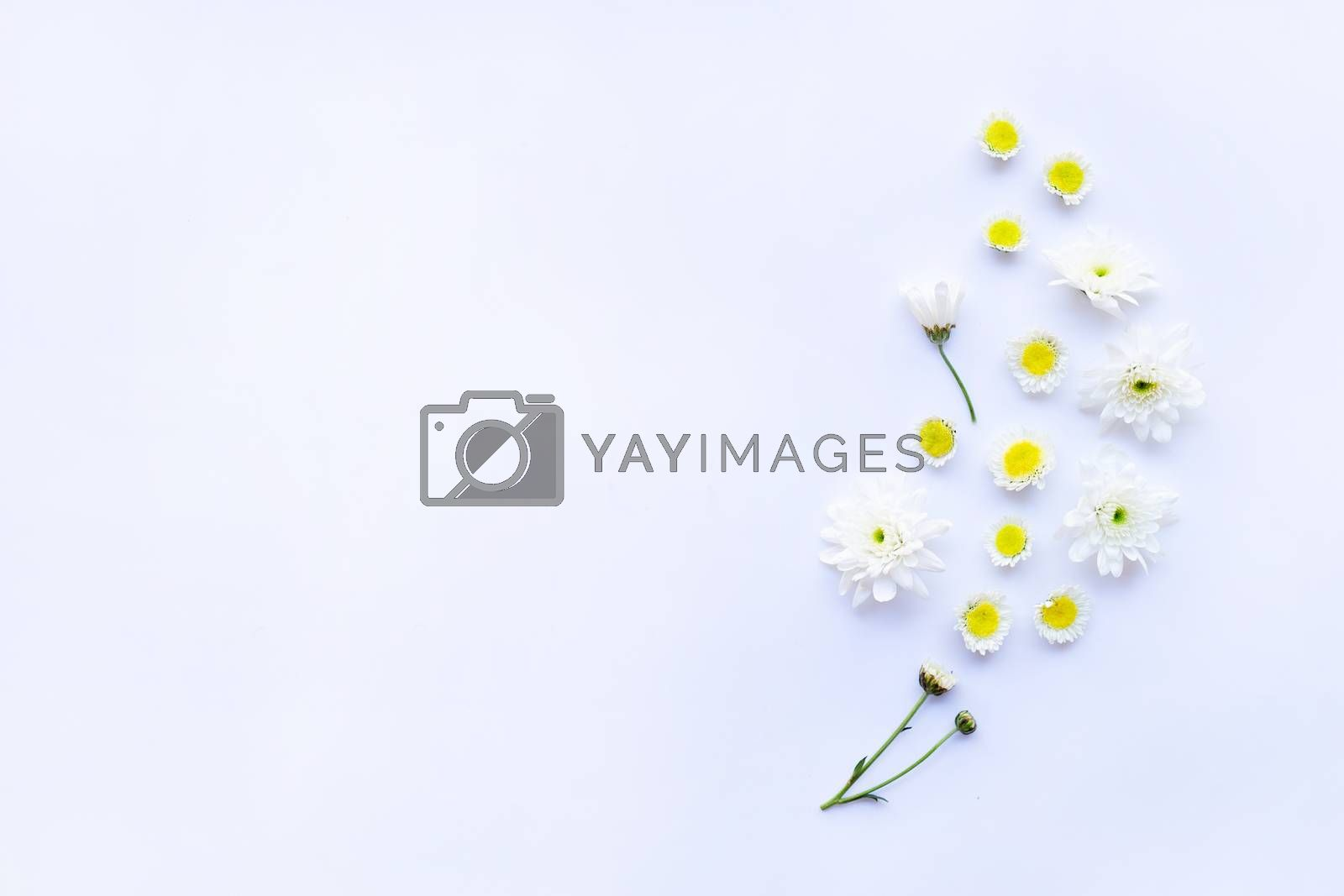 Composition of white yellow flowers. Chrysanthemums on white background.