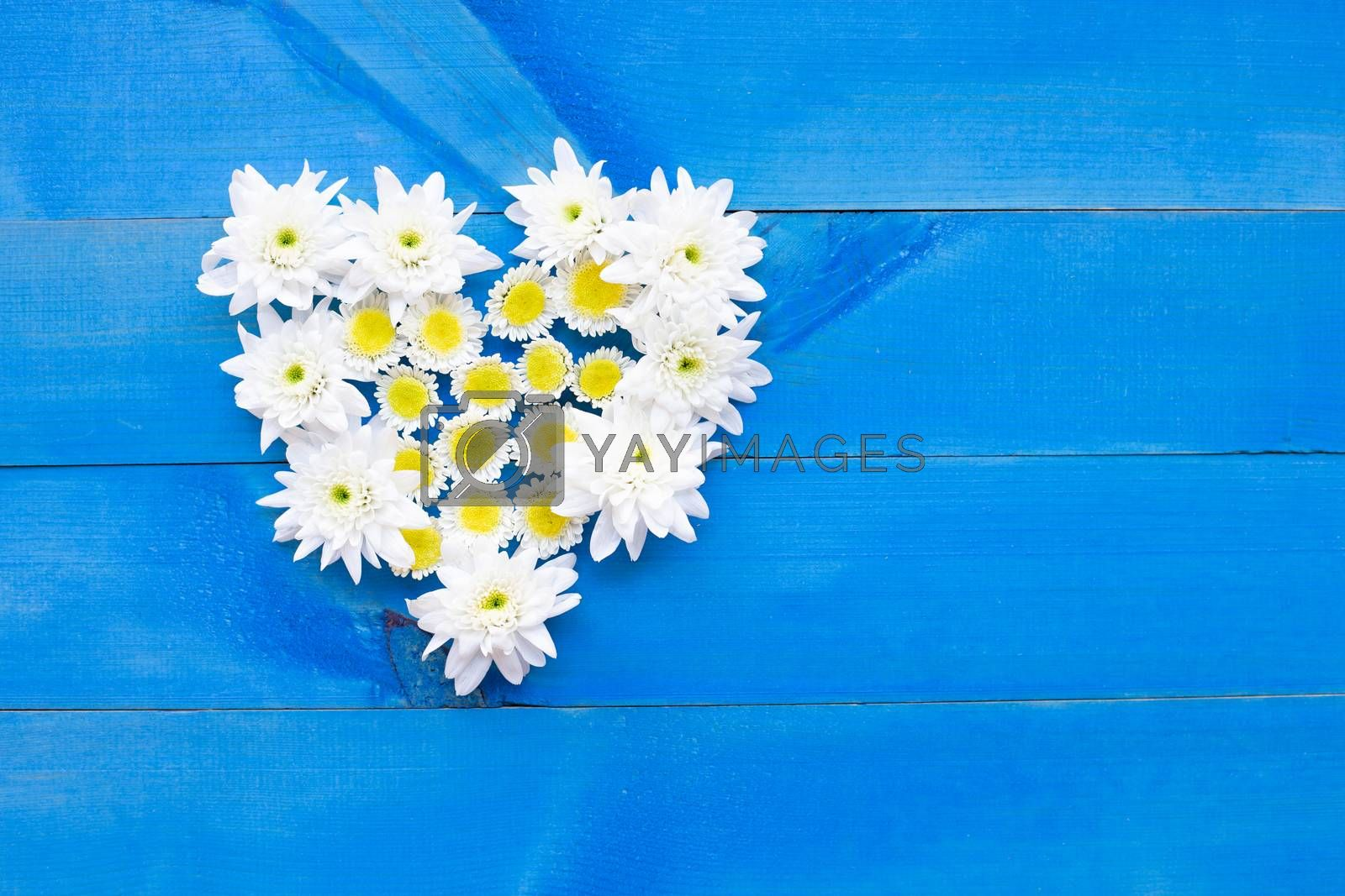 Composition of white yellow flowers. Chrysanthemums on blue wooden background. Copy space