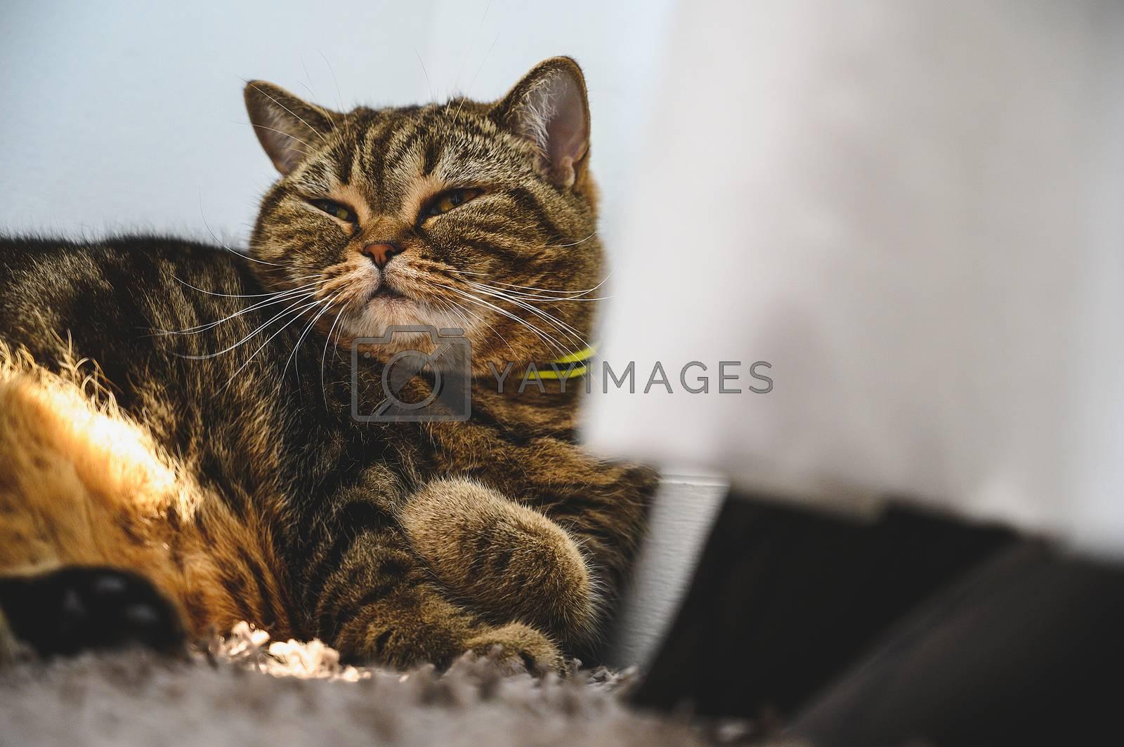 cat Portrait of Happy sleep love to animals concept