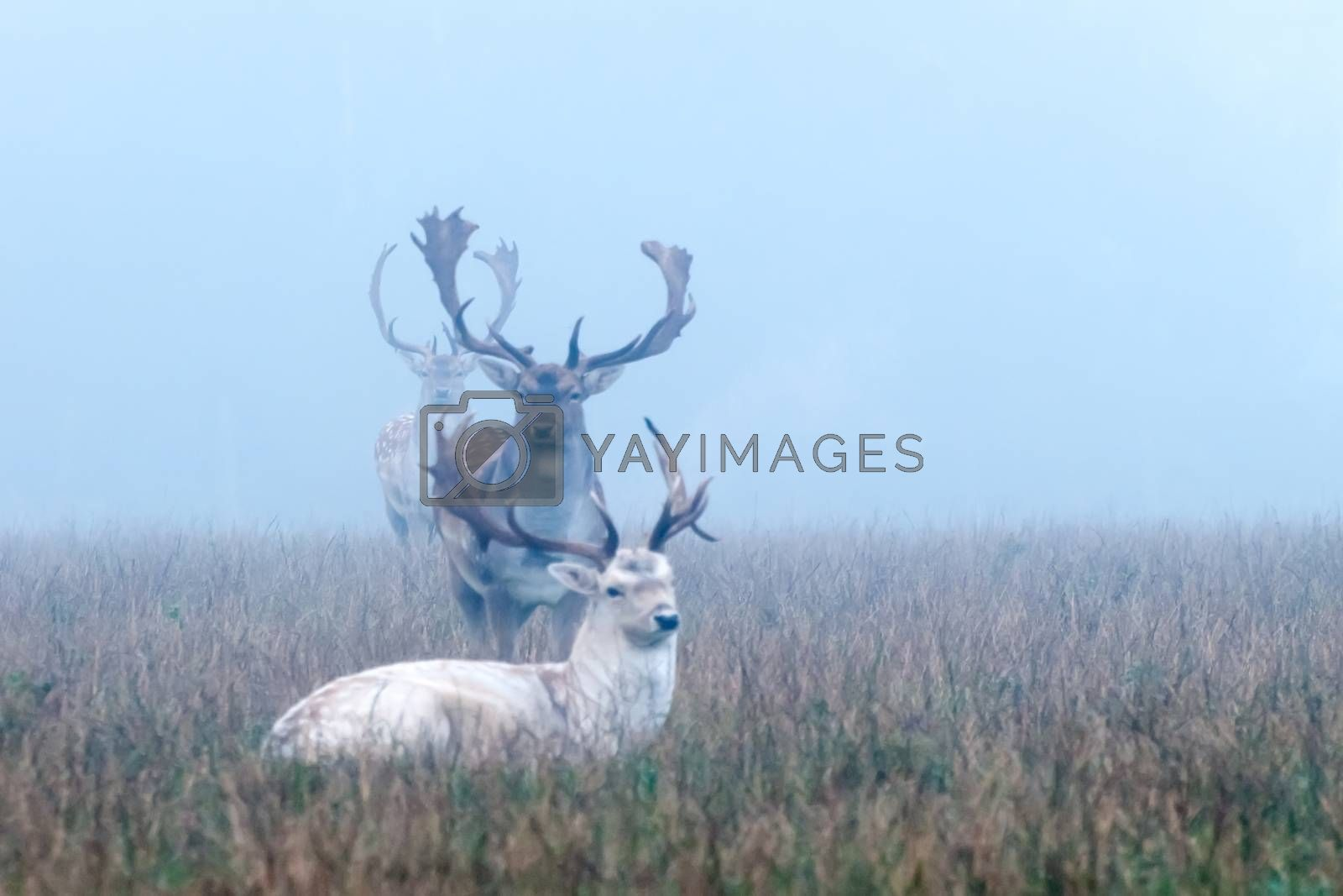 early morning, animals in the fog