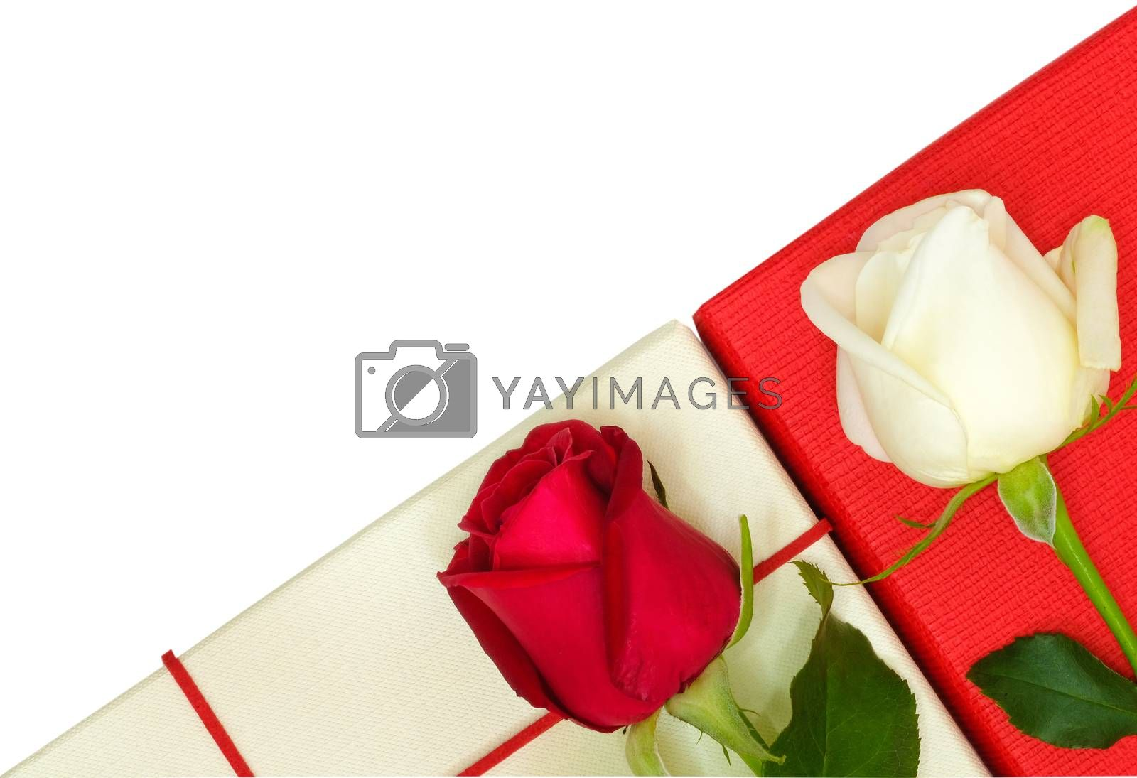 two roses on paper boxes by Nawoot