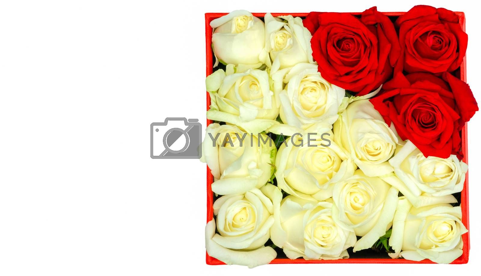 white and red roses in a paper box by Nawoot