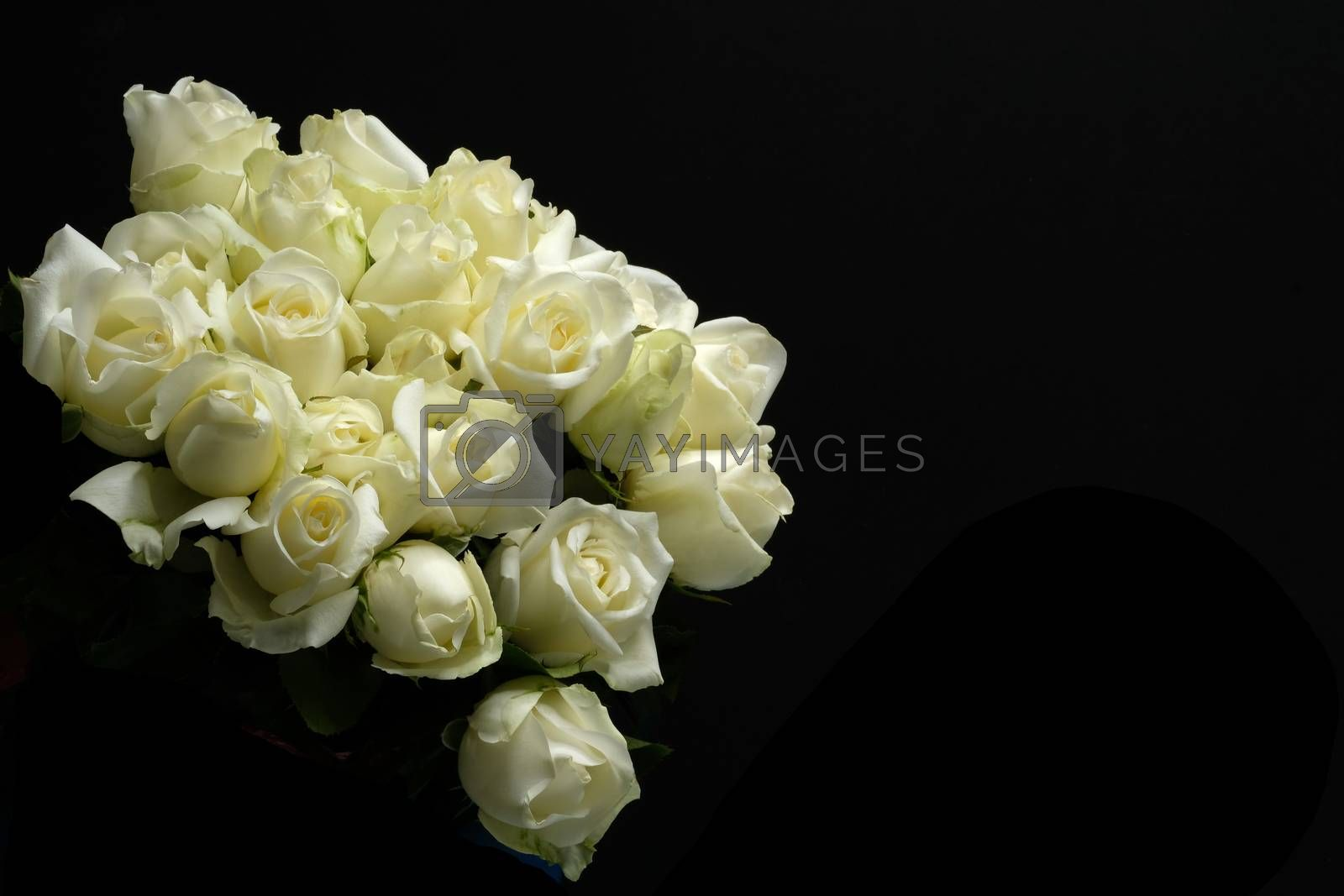 beautiful bouquet of white rose, by Nawoot