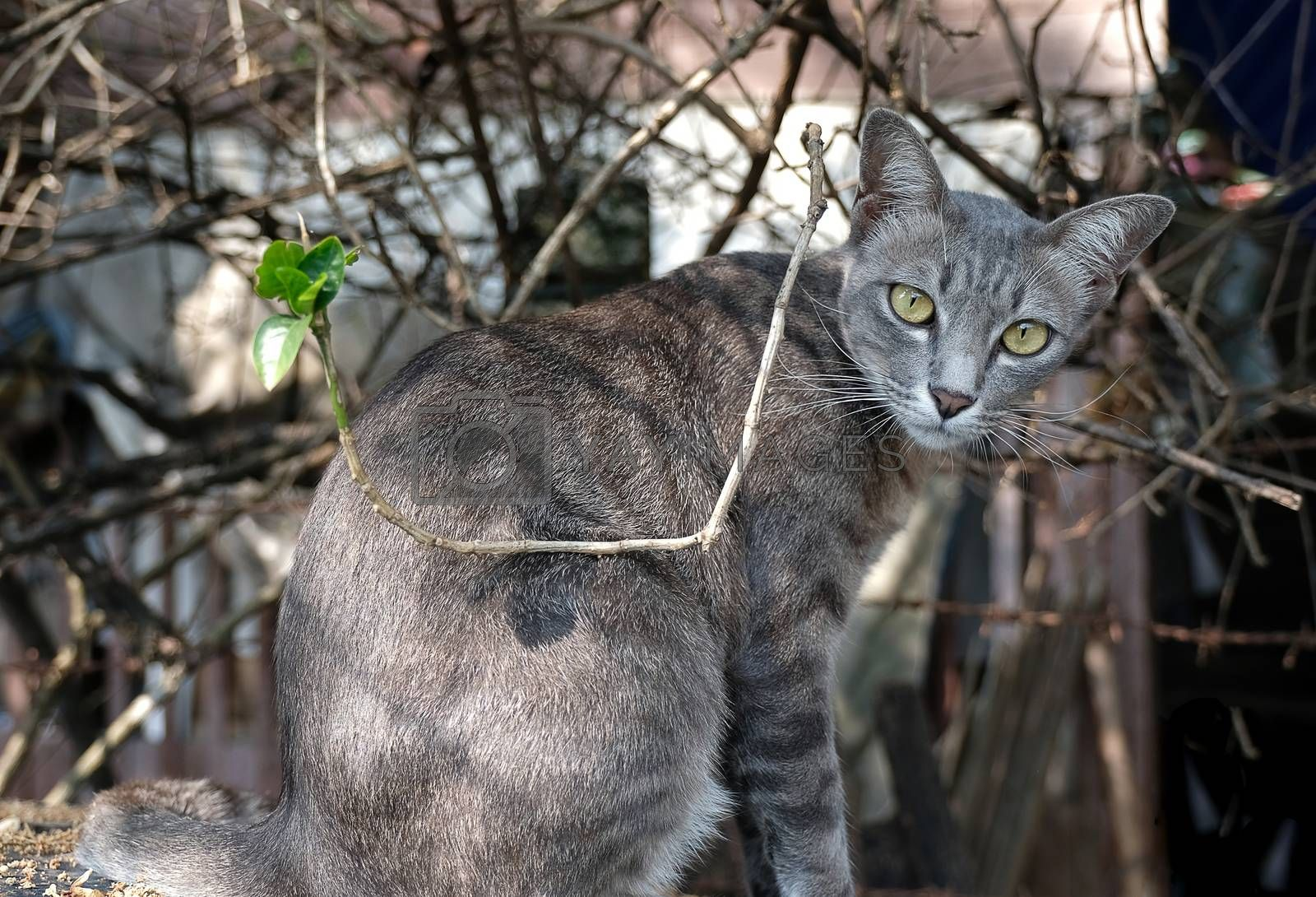 a gray house cat by Nawoot
