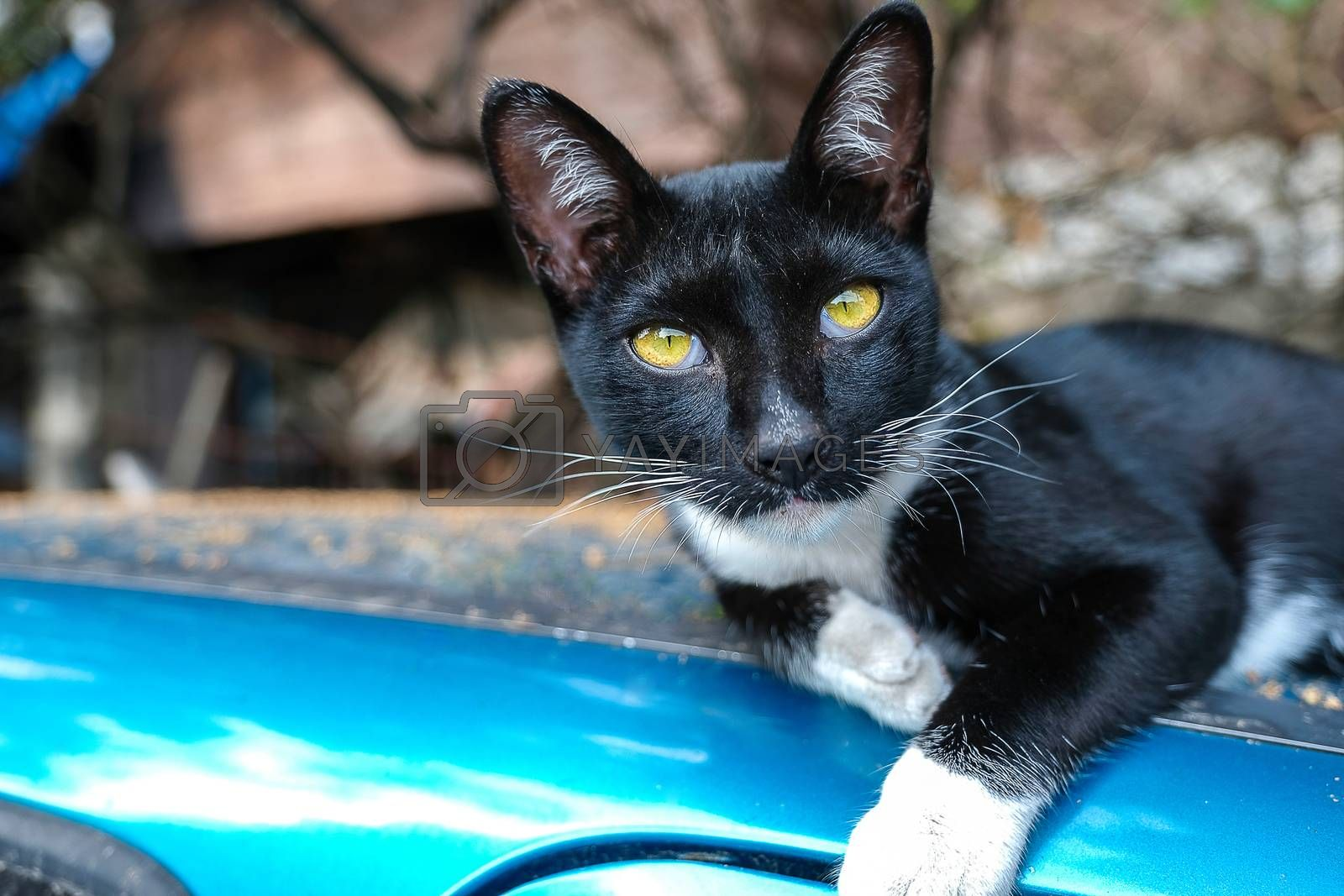 a portrait of a black street cat by Nawoot
