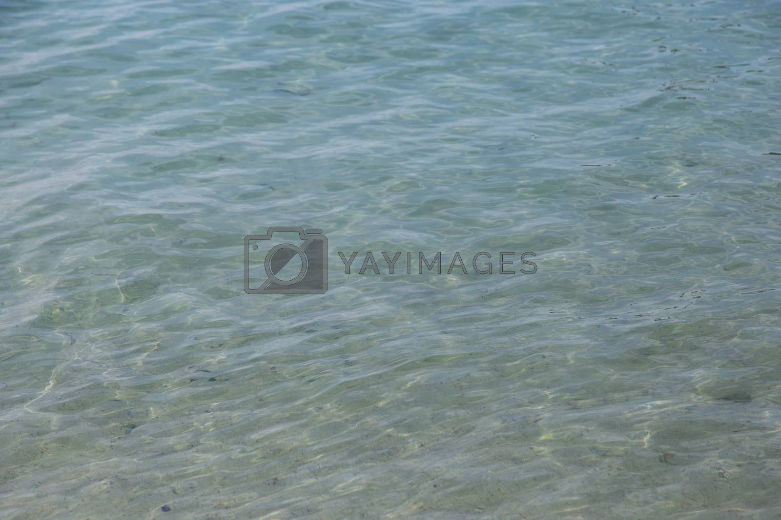 Water wave in tropical sea for background