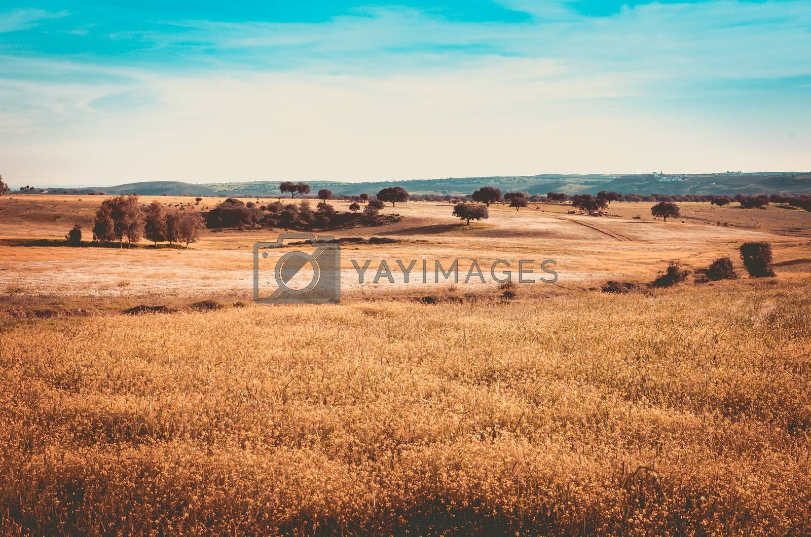autumn landscape in Alburquerque, Extremadura, Spain