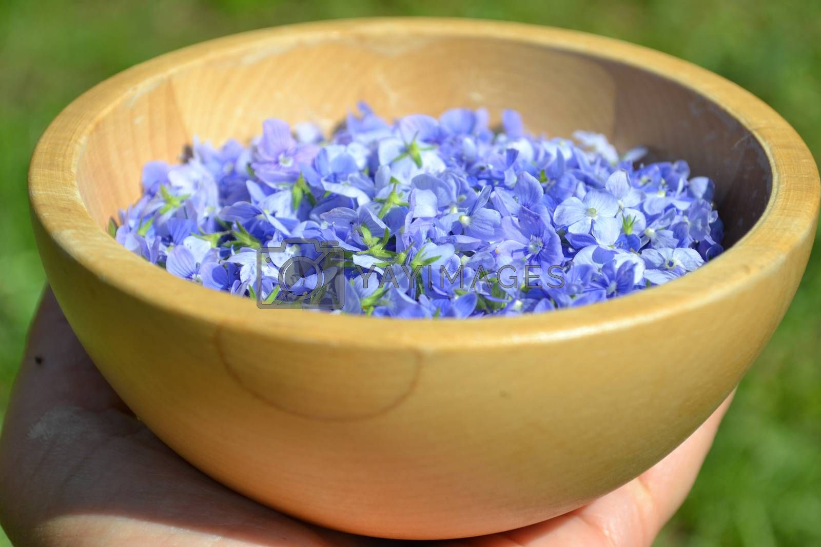Hand holding a wooden bowl with blue flowers