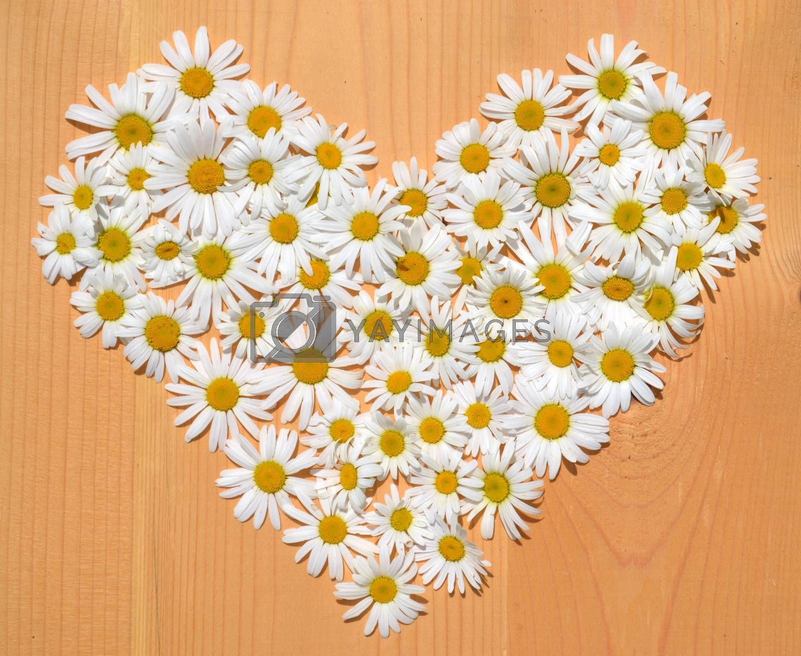 Daisy flowers in a shape of heart on wooden background