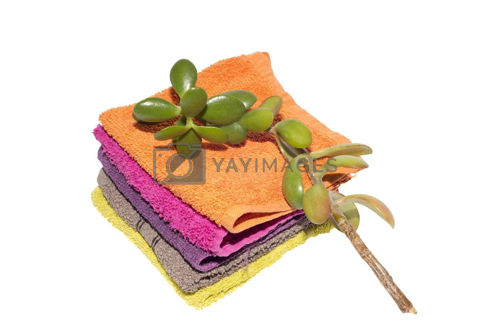 facecloths of various shades with natural green plant