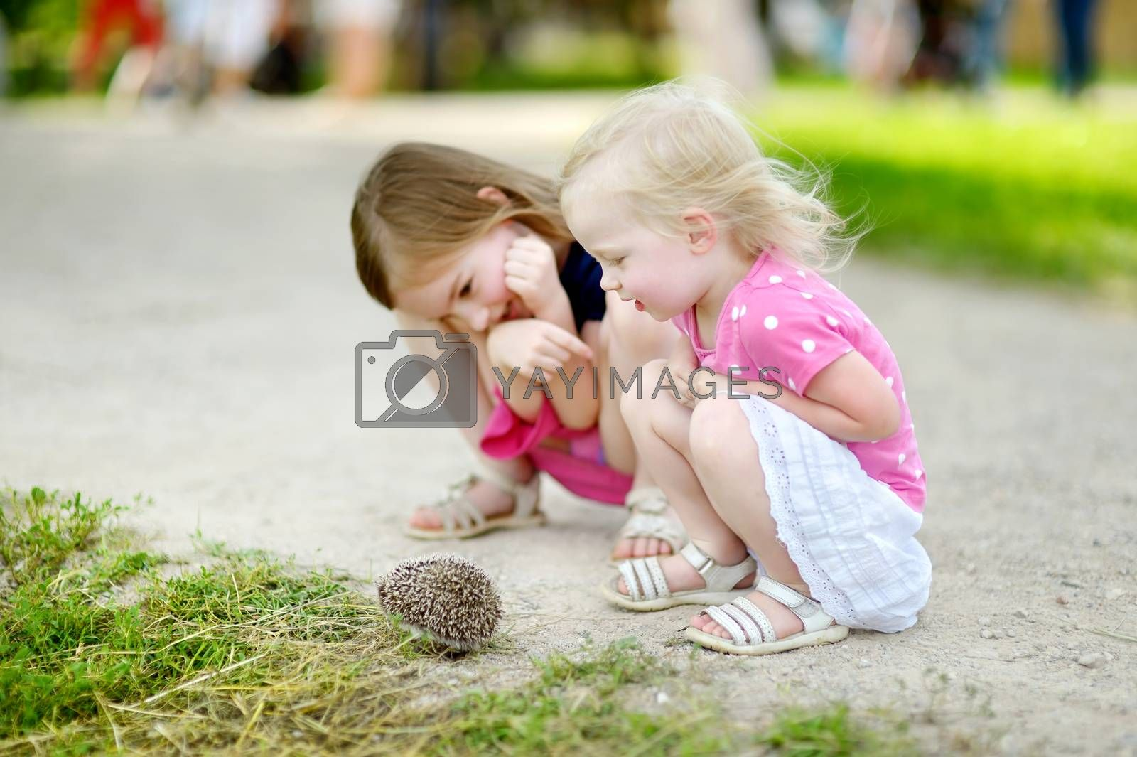 Two adorable little sisters playing with a hedgehog outdoors