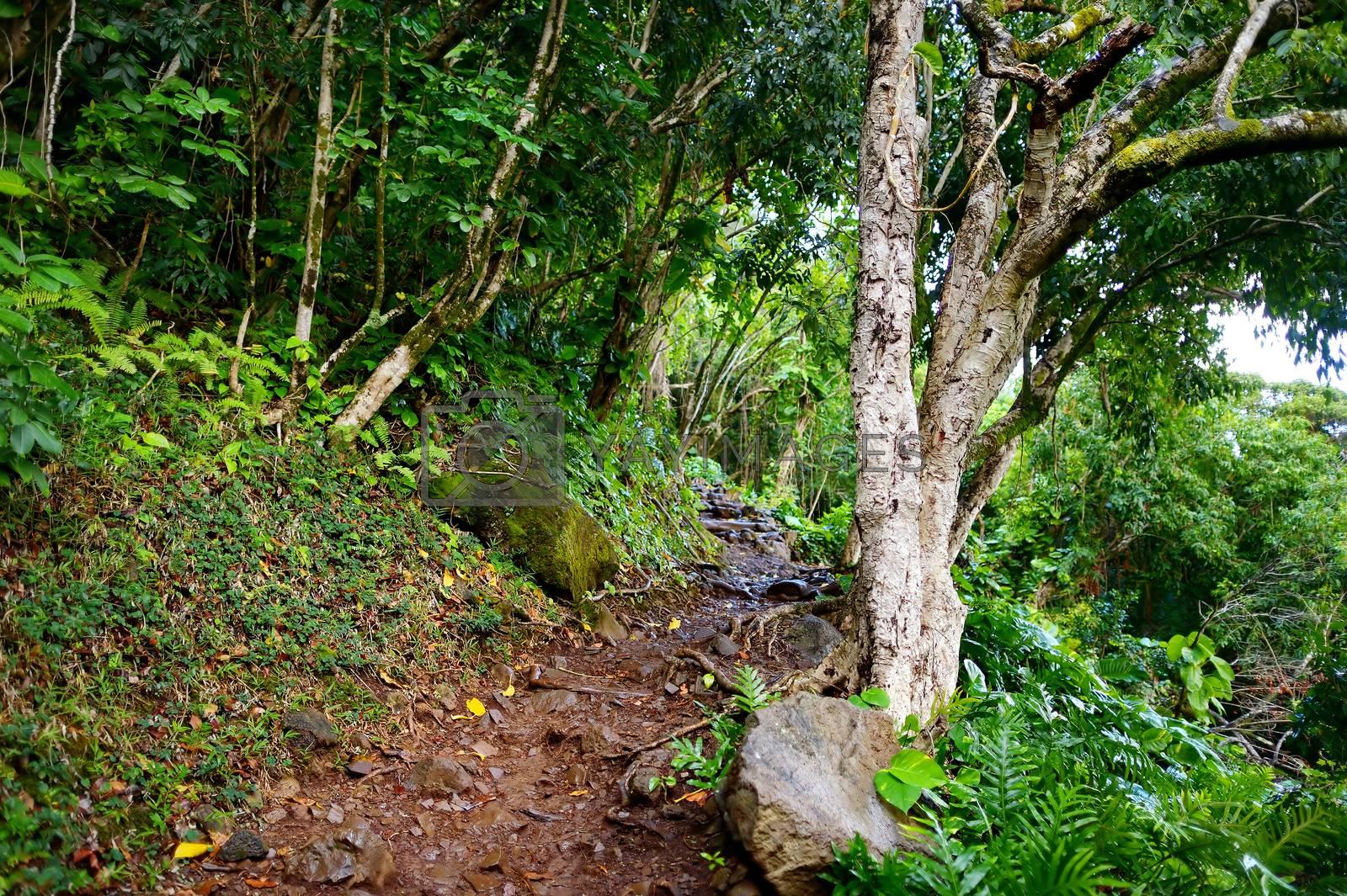 Stunning view from Kalalau trail in Kauai, Hawaii