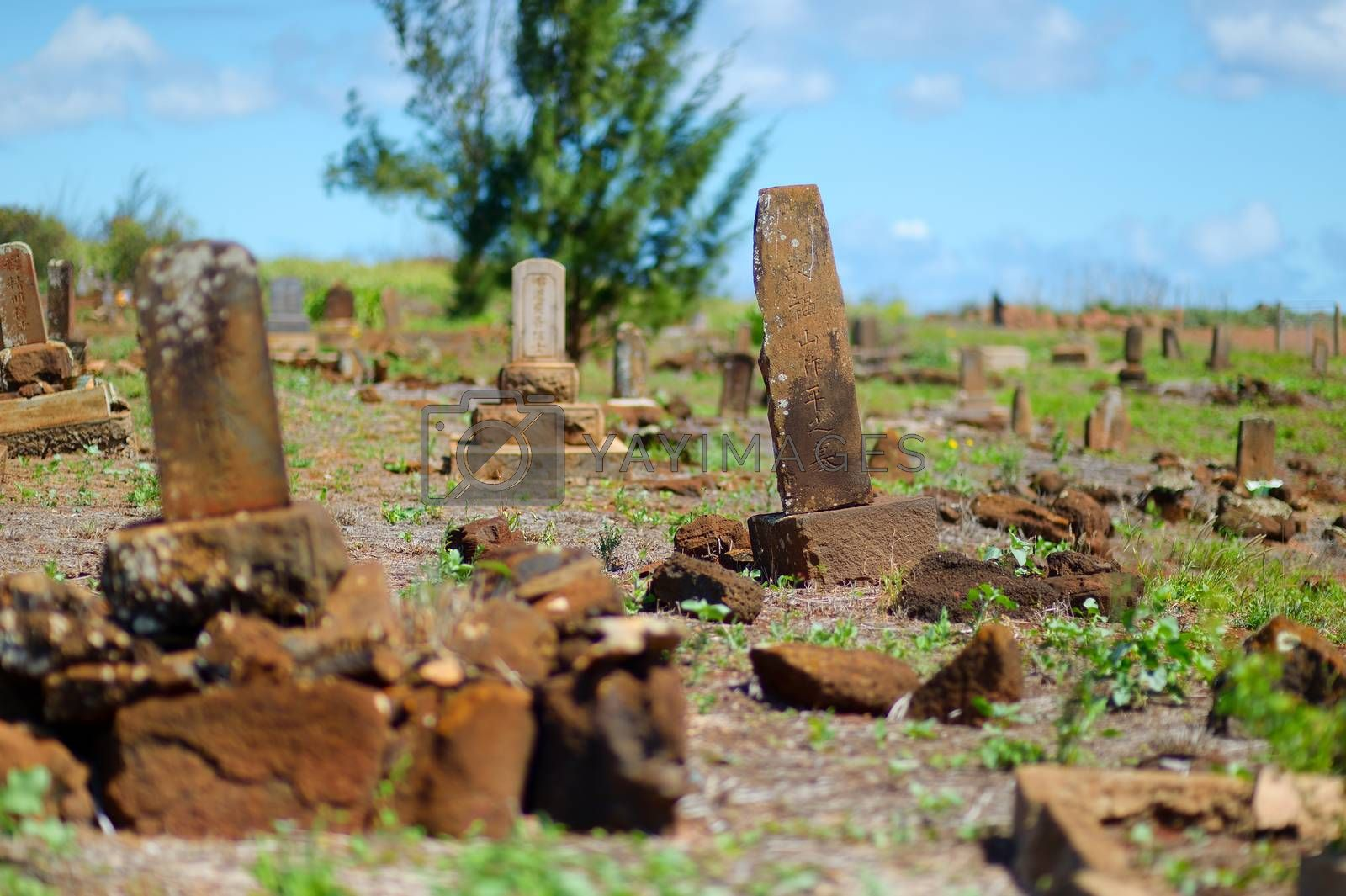 Old chinese grave headstones abandoned on Kauai by maximkabb