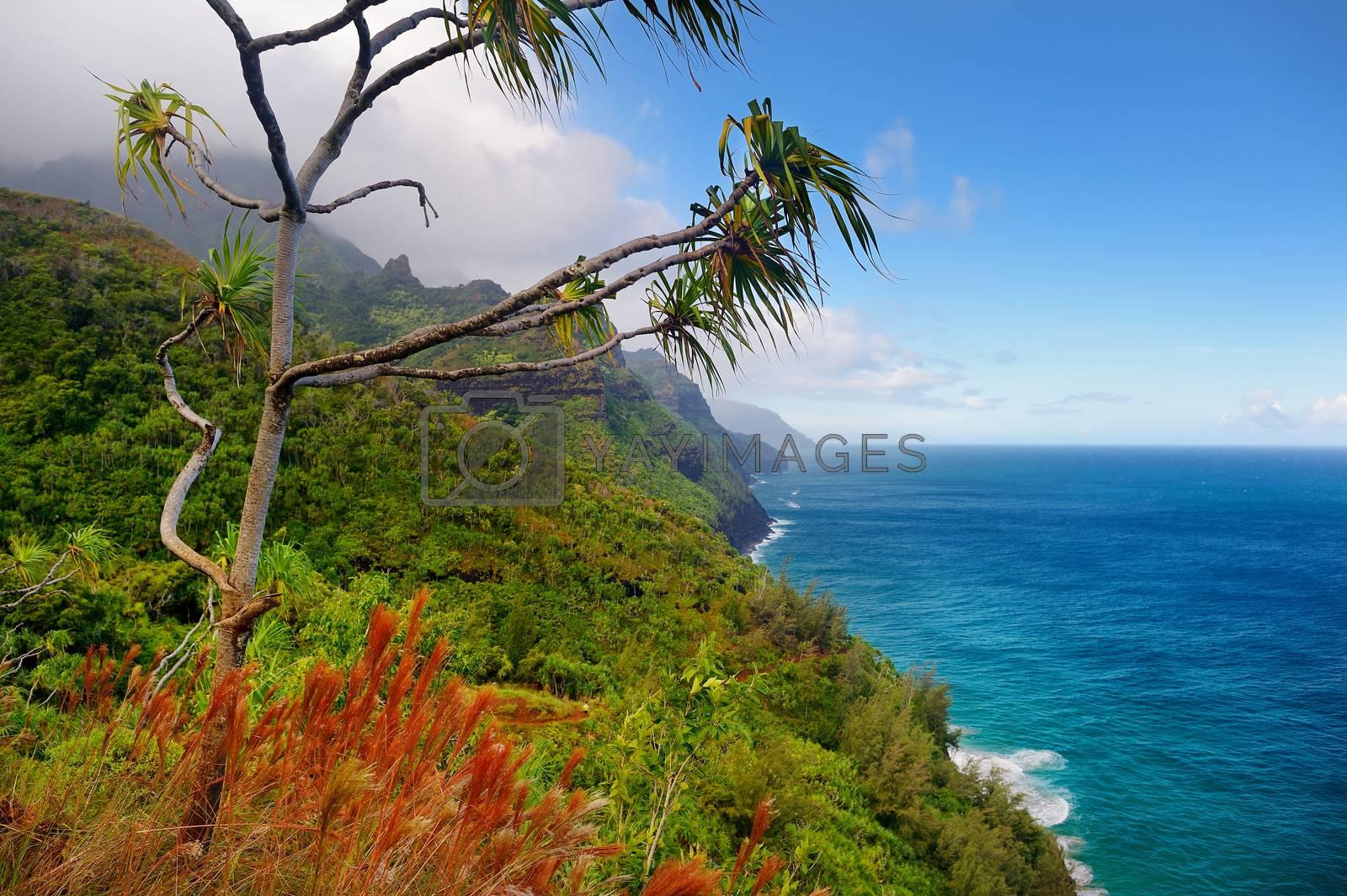 Royalty free image of Kalalau trail in Kauai, Hawaii by maximkabb