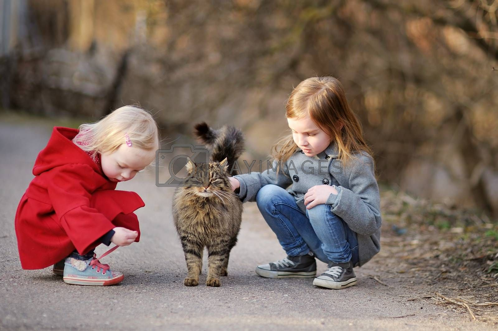 Two little sisters met a cat on beautiful spring day