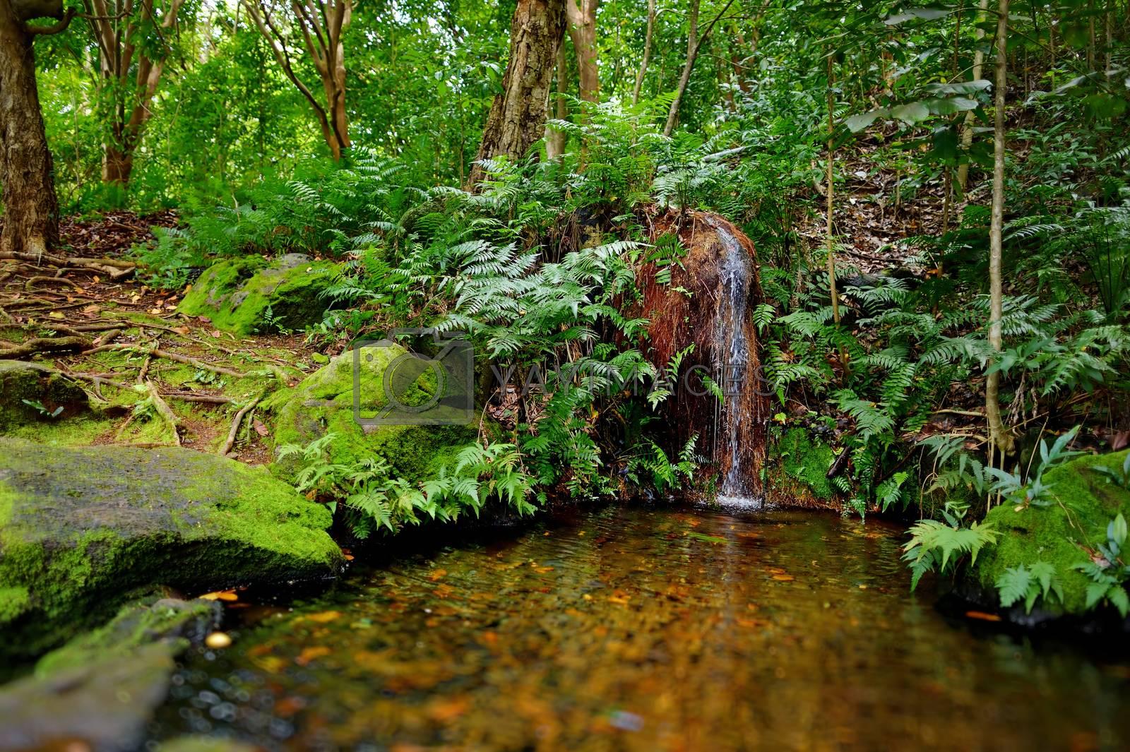 Mountain river or stream at Kalalau trail, Kauai, Hawaii